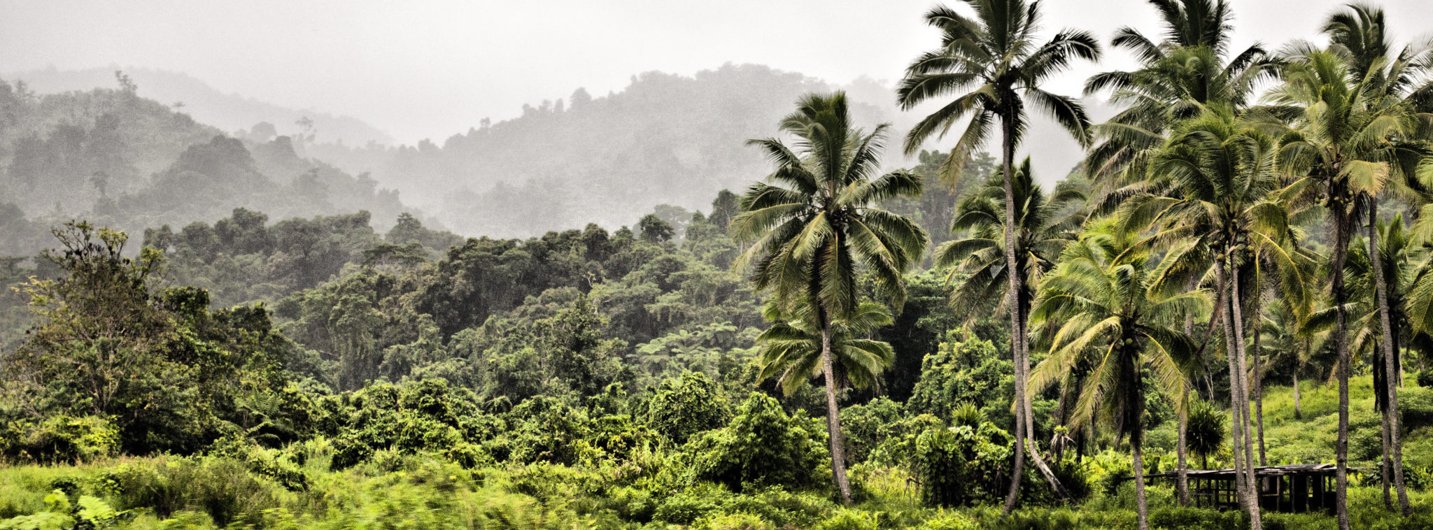 Fidschi-Inseln-Palmen