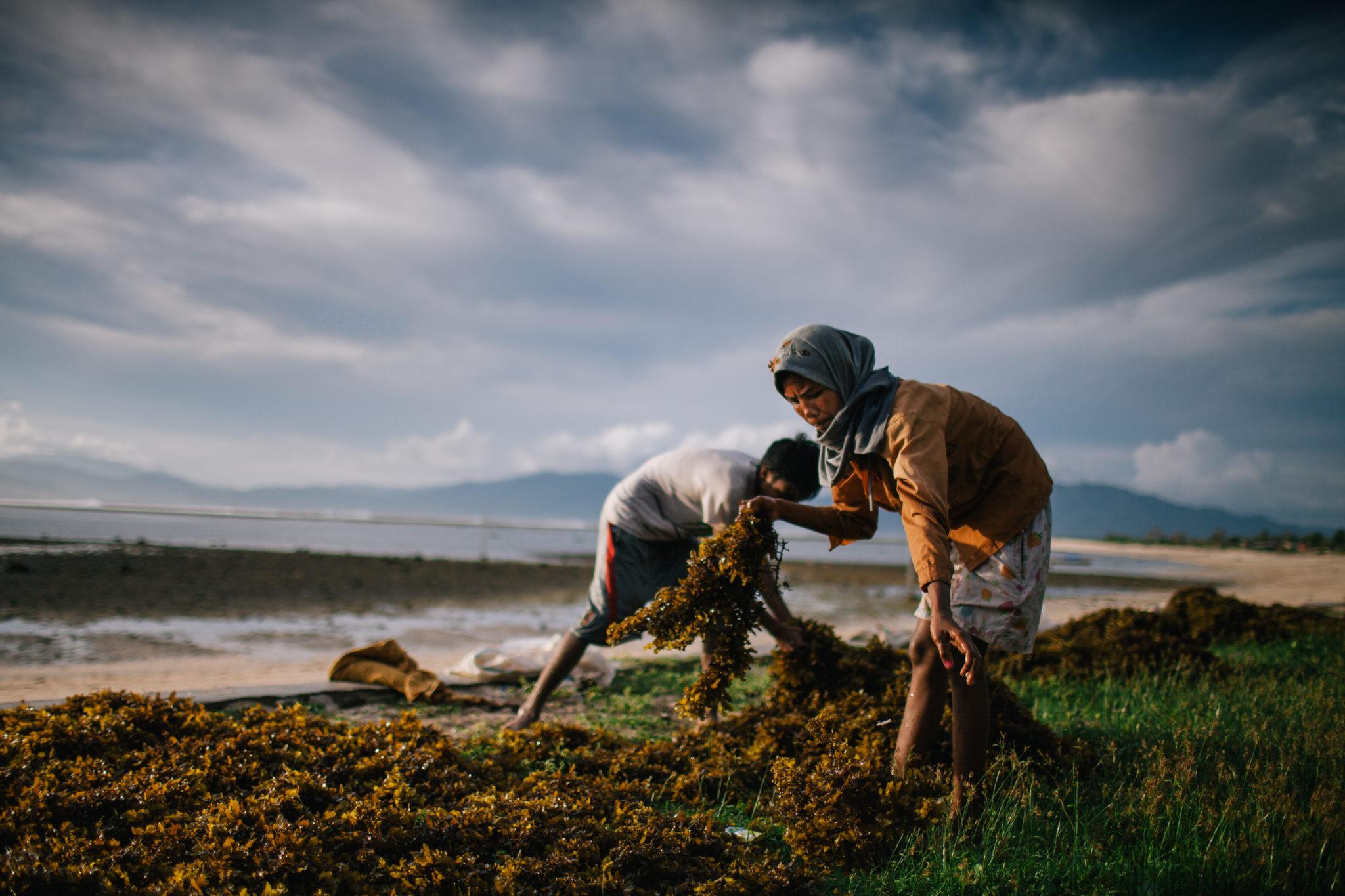 Sumbawa-Algen-Frauen