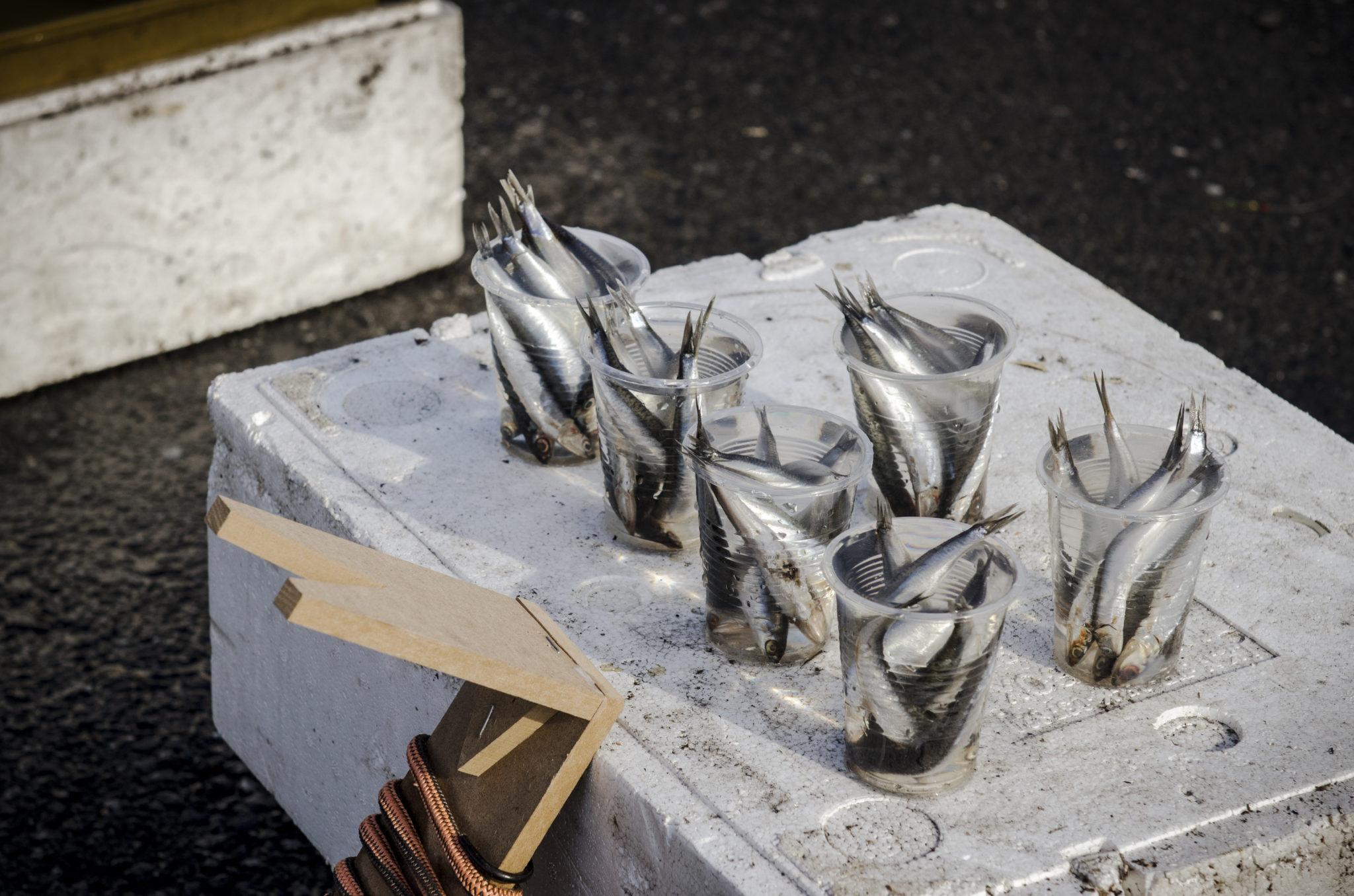 Tuerkisch-Kochen-Galata-Bruecke-Fisch