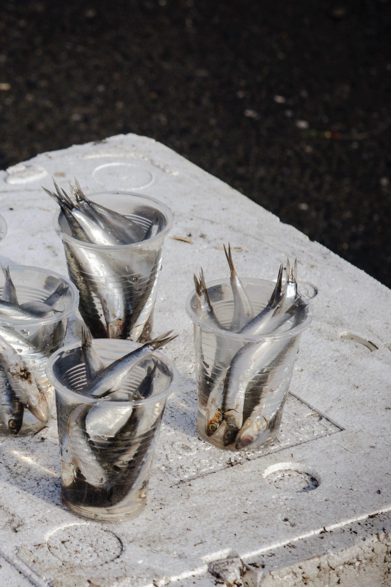 Tuerkisch-Kochen-Galata-Bruecke-Fische