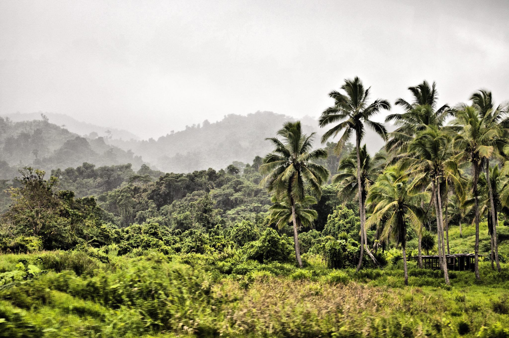 Dschungelflair gibt es auf allen Fiji Inseln