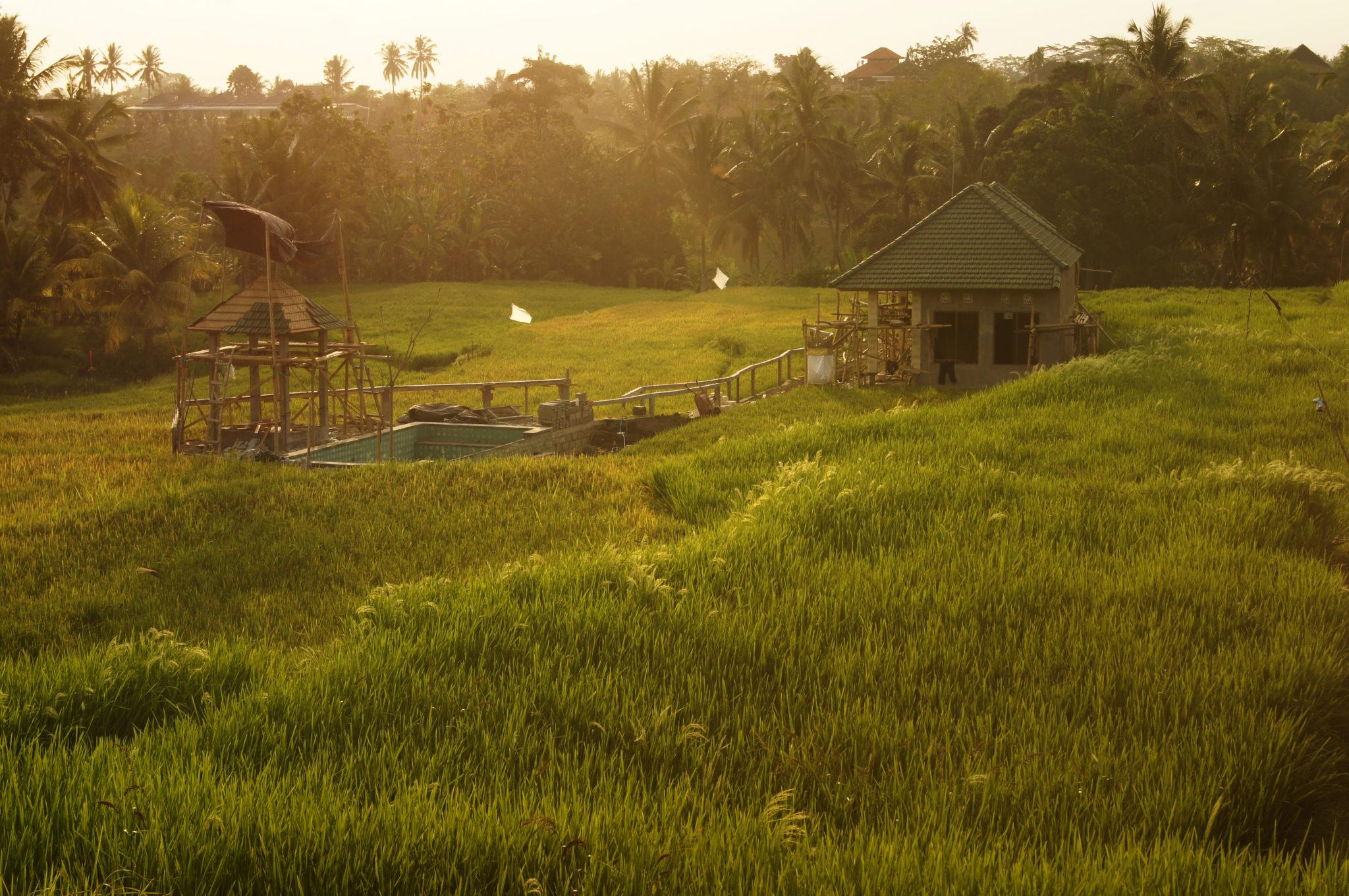 Indonesien-Reisetipps-Reisefelder-Bali