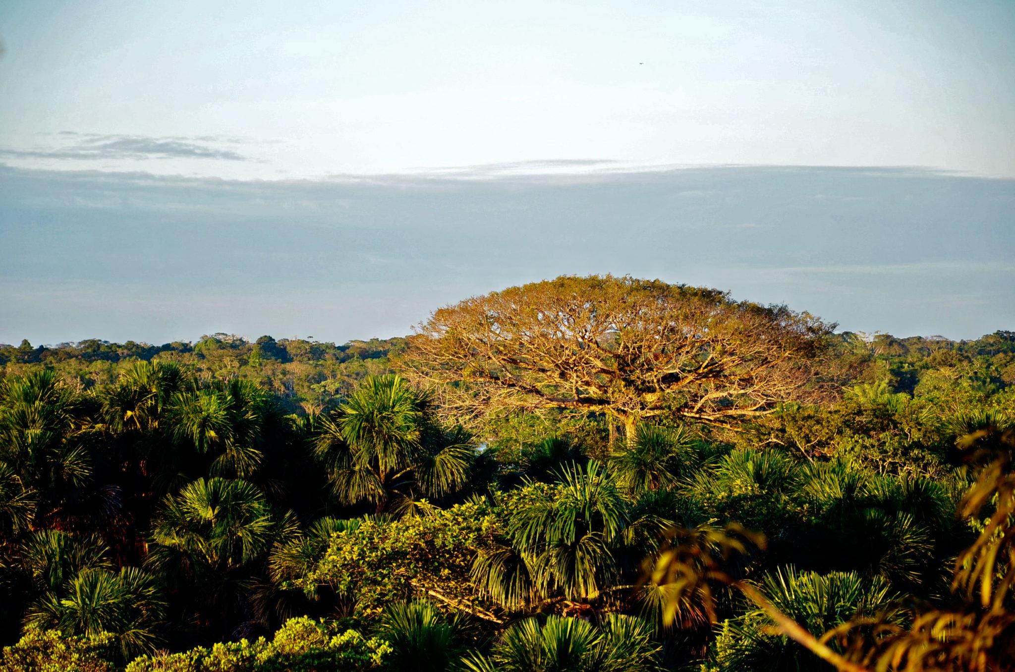 Yasuni Nationalpark und Napo Fluss in Ecuador gehören zu den besten Ecuador Reisetipps