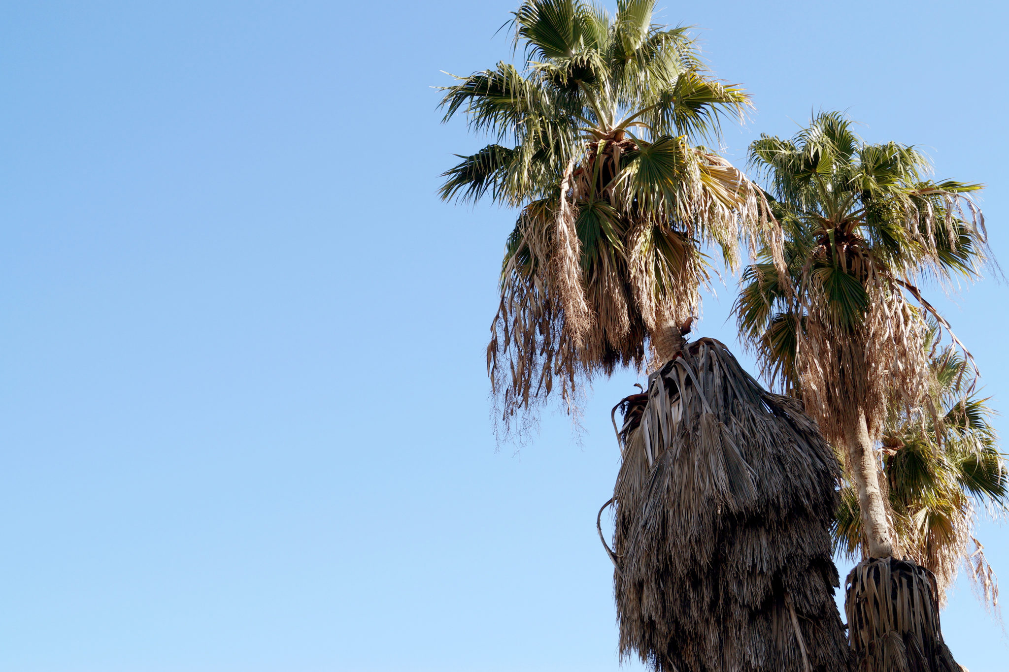Libanon-Sehenswuerdigkeiten-Palmen