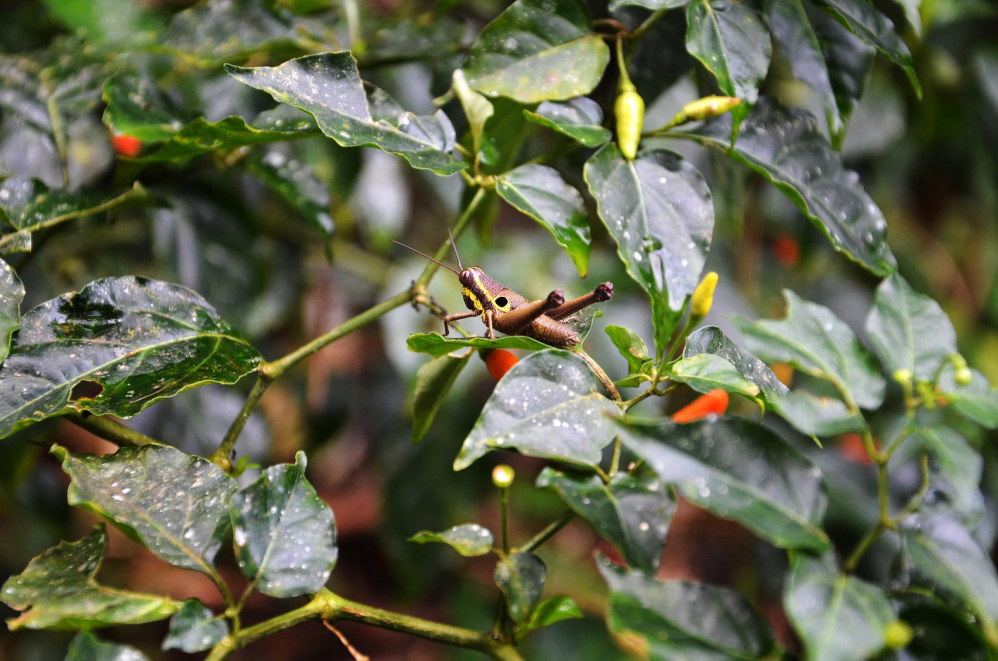 Sehenswuerdigkeiten-Ecuador-Tiere-Dschungel-Napo-Yasuni