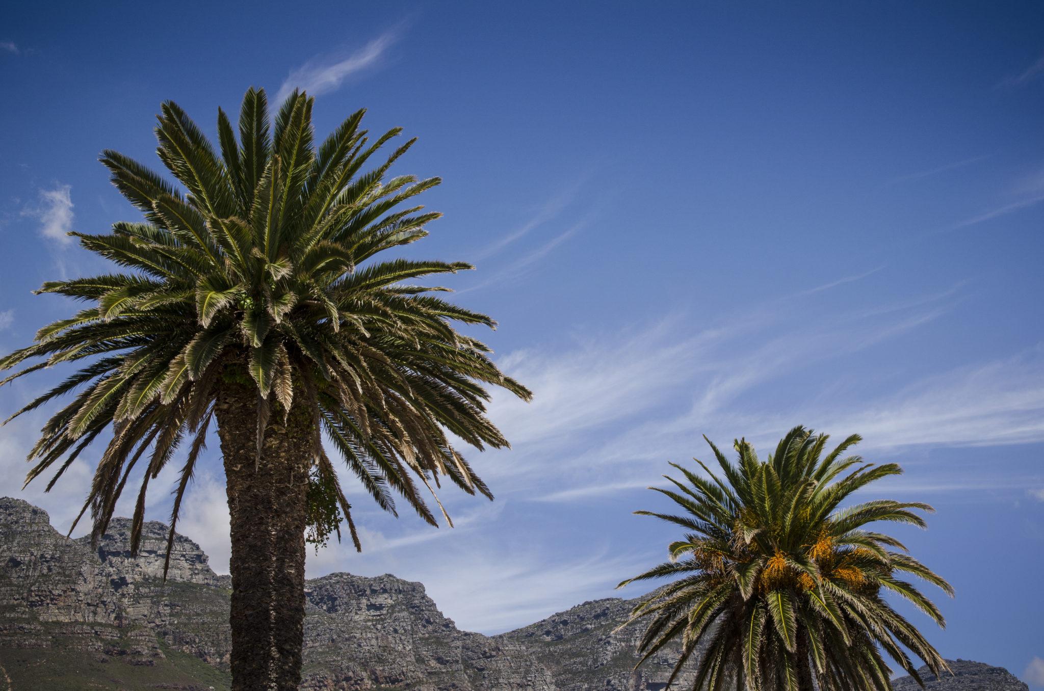 Camps Bay in Kapstadt gehört zu den besten Südafrika Reisetipps