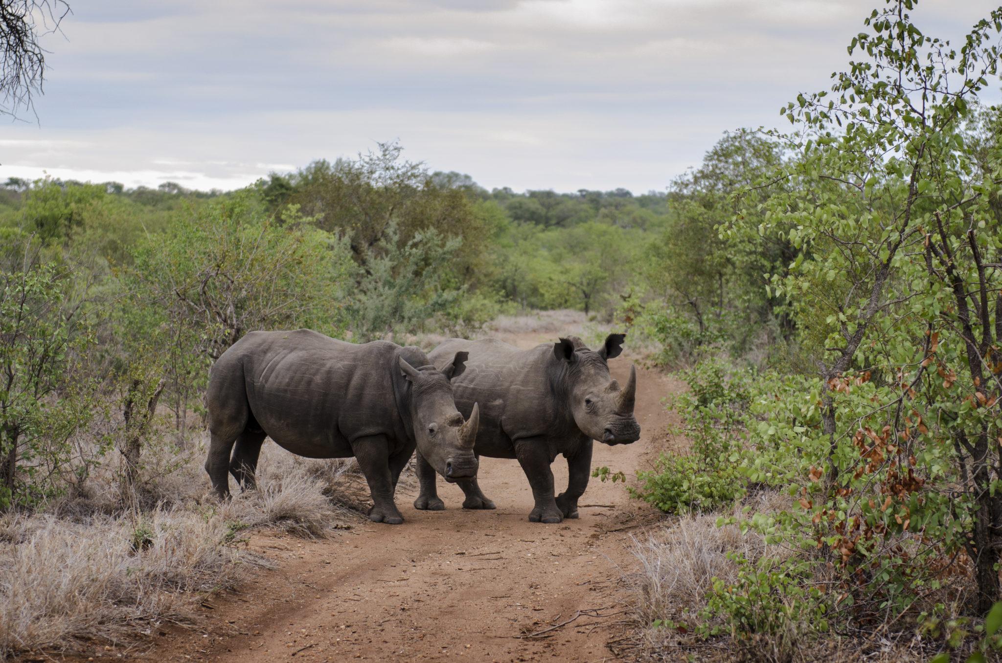 Suedafrika-Sehenswuerdigkeiten-Nashoerner-Safari