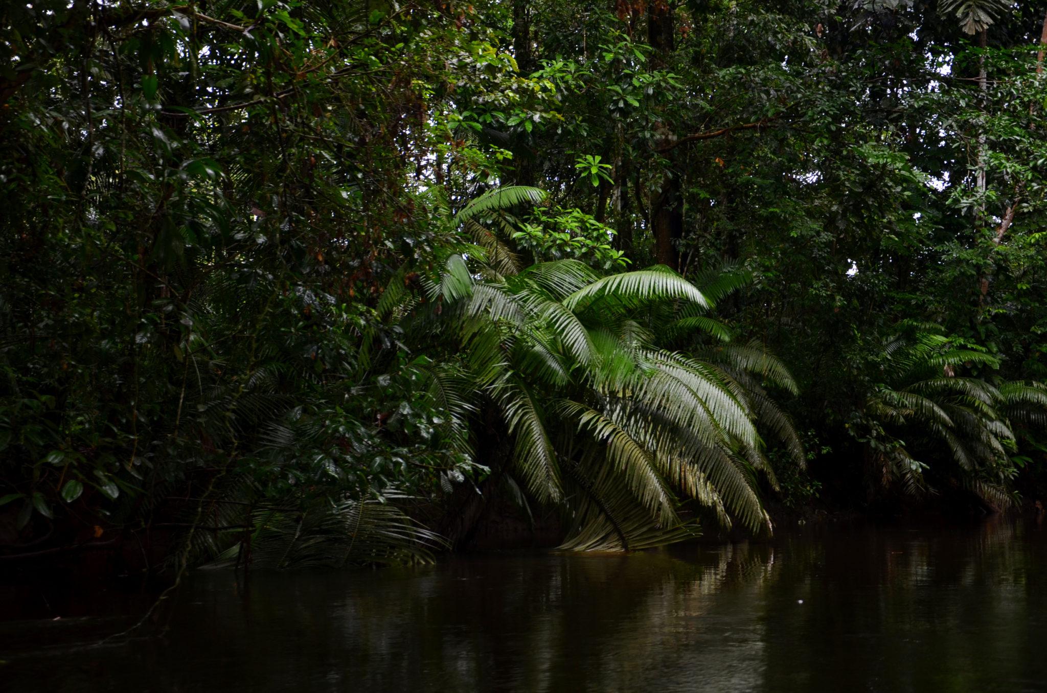 In den Gewässern im Yasuni Nationalpark in Ecuador kann man Piranhas angeln