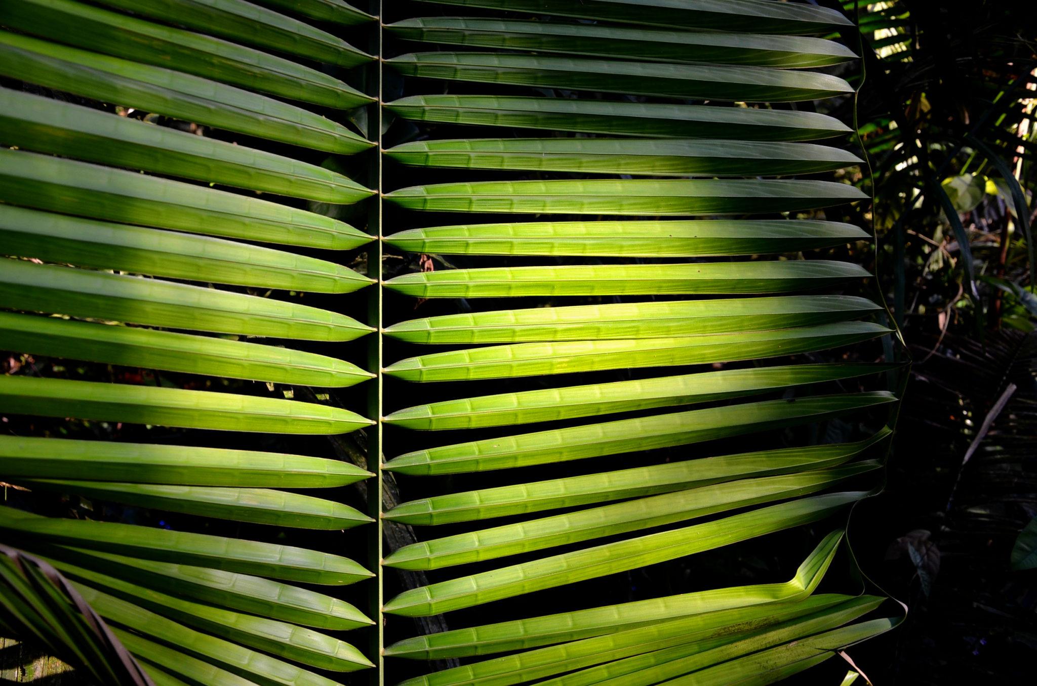 ecuador-piranhas-angeln-palme