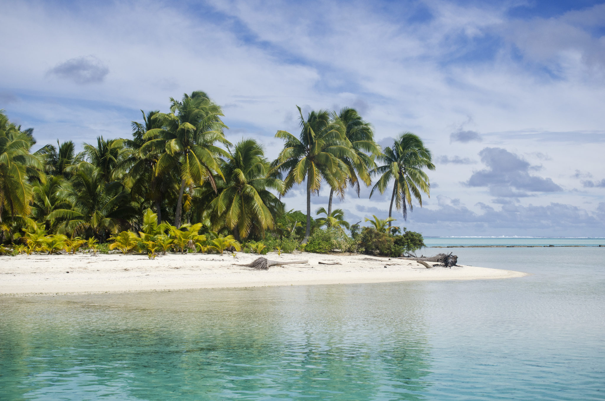 Aitutaki-Cook-Islands-Palmen
