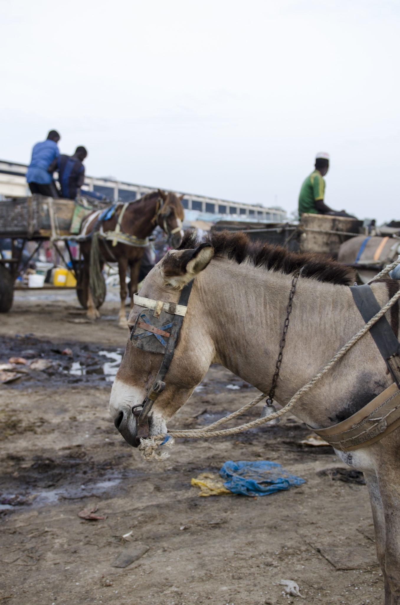 Fischmarkt-Mbour-Esel