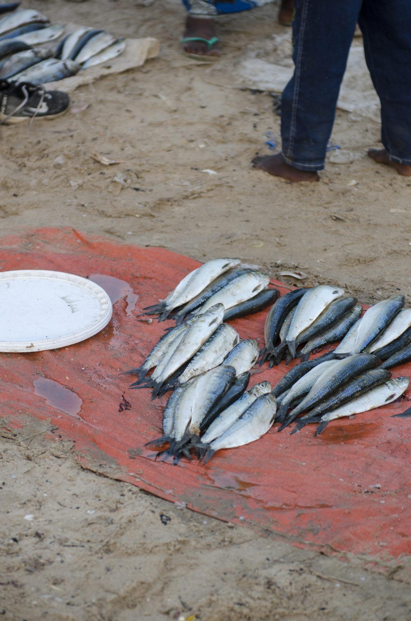 Fischmarkt-Mbour-Fische
