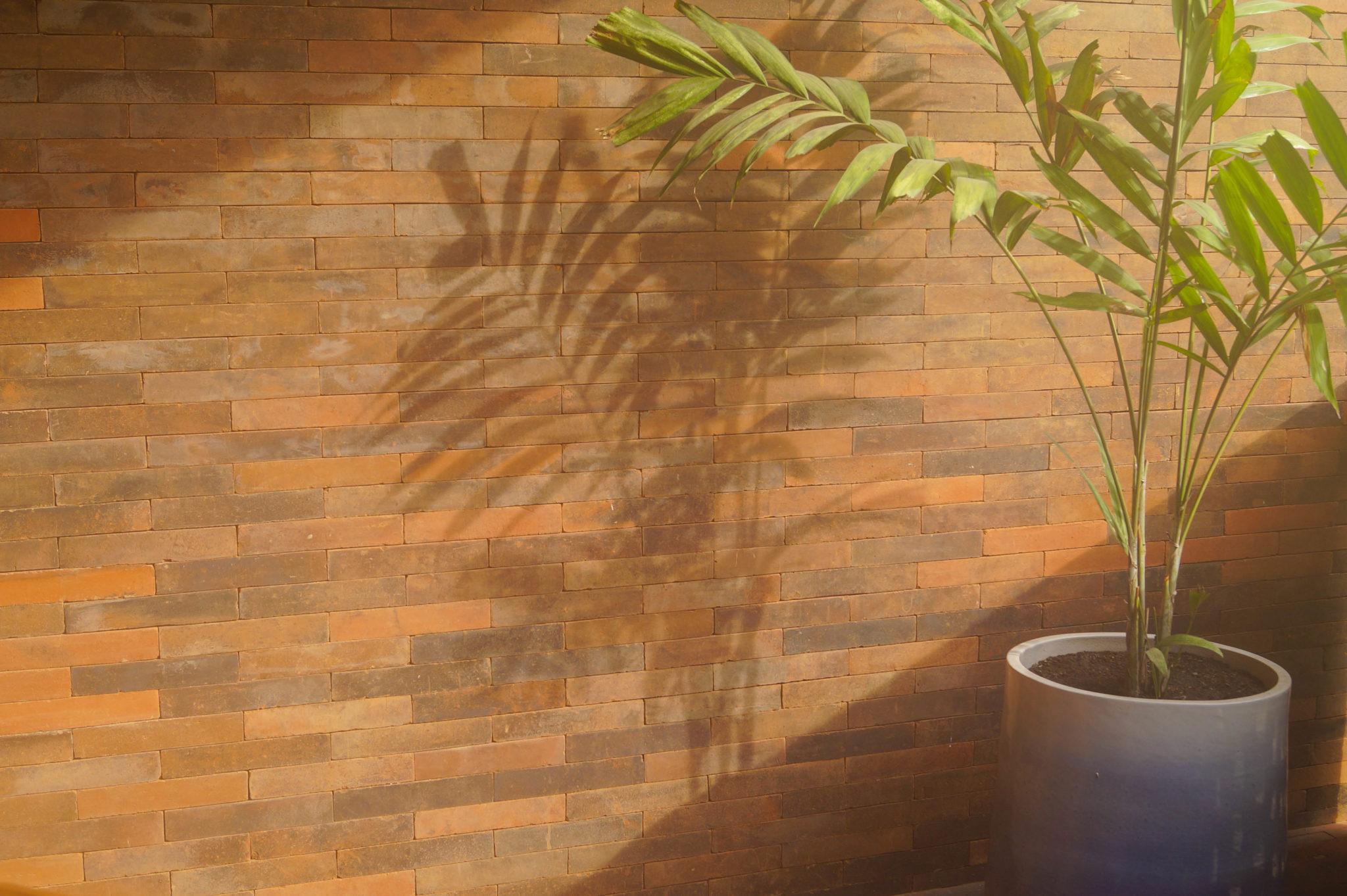 Eine Palme auf dem Balkon des Hotelzimmers