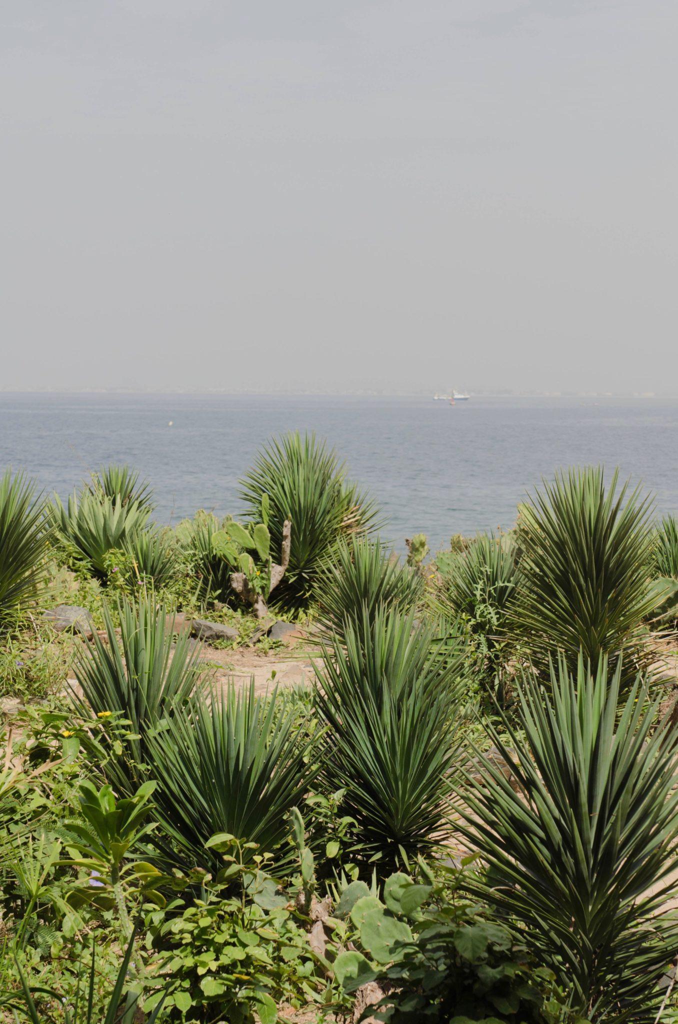 Tagesausflug-von-Dakar-Ile-de-Goree-Pflanzen
