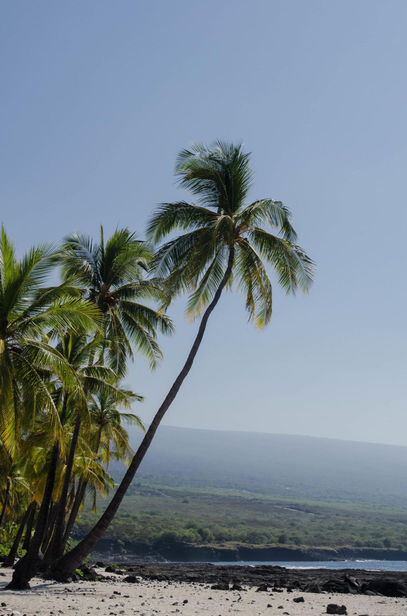 Neben zahlreichen Vulkanen, sind auch die Strände auf Big Island absolut paradiesisch