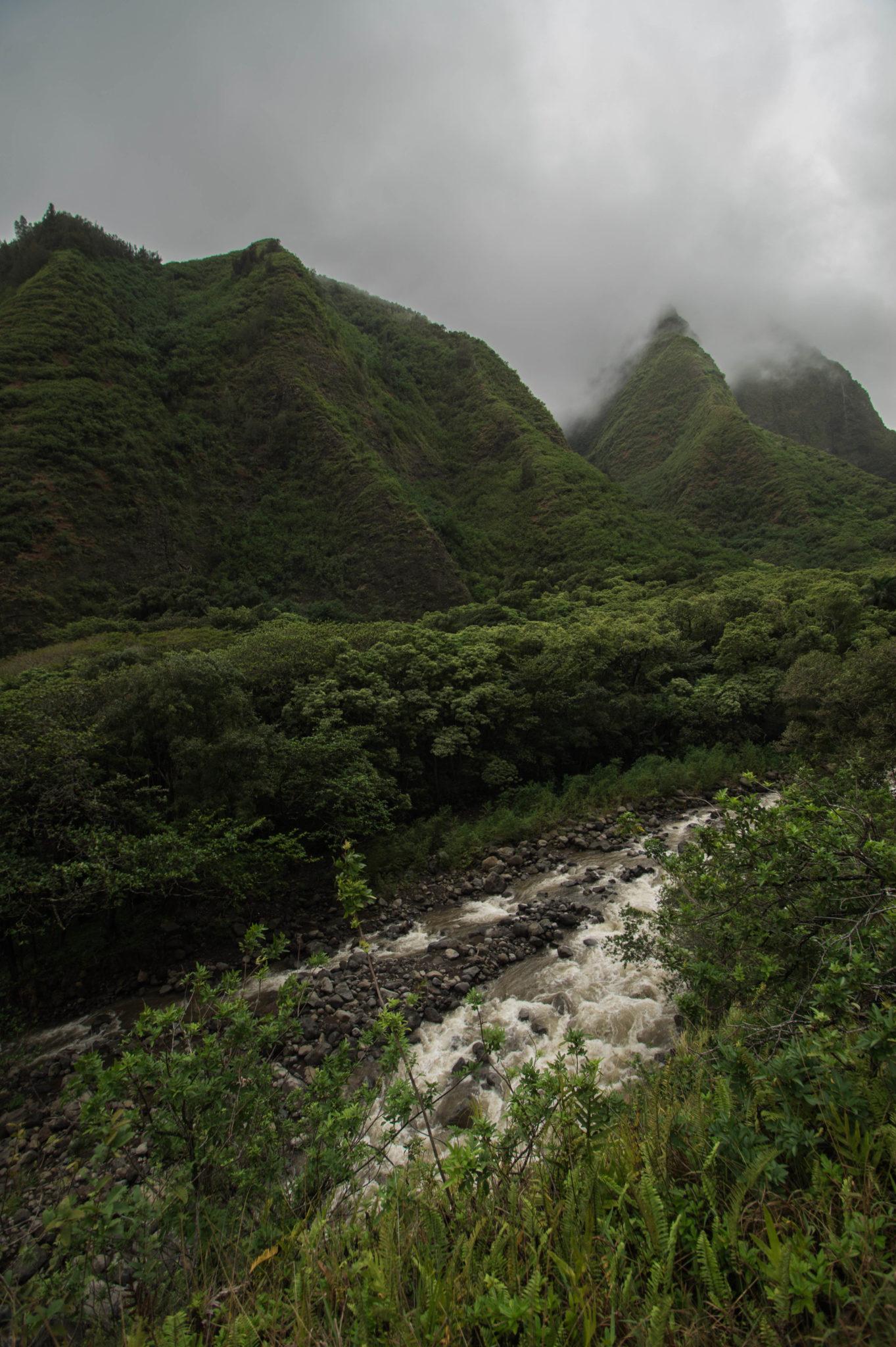 Grün, grüner, Maui Reisetipps