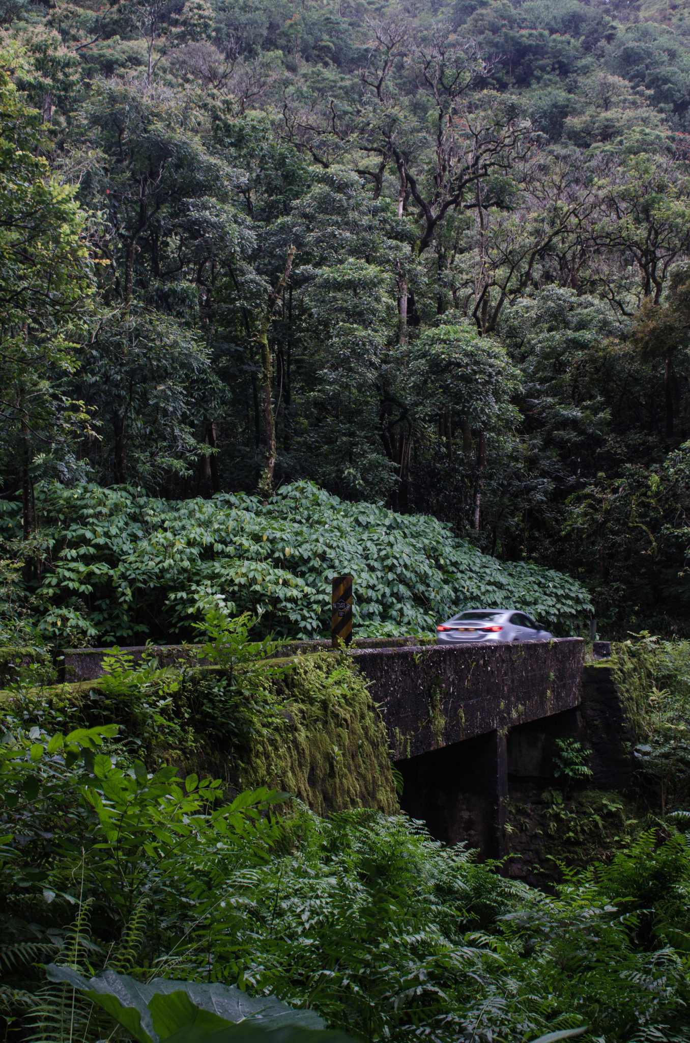 Die Road to Hana ist unter den Hawaii Inseln einmalig