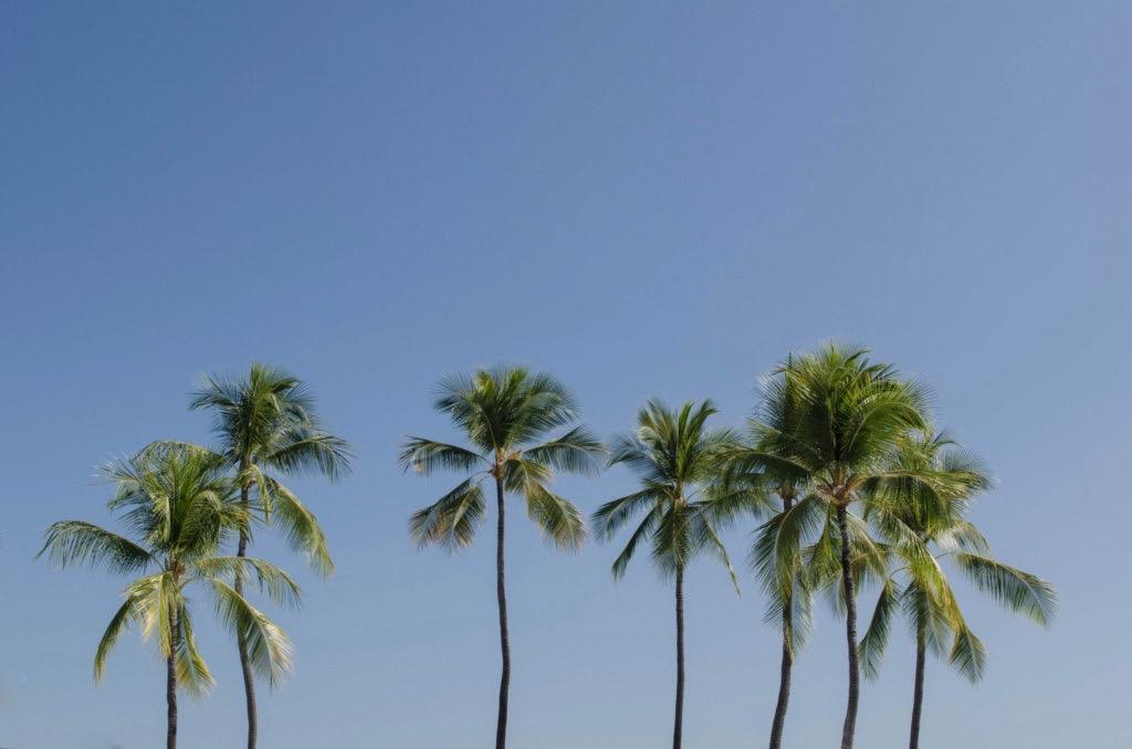 Hawaii Urlaub planen: Tipps zur Rundreise & Inselhopping