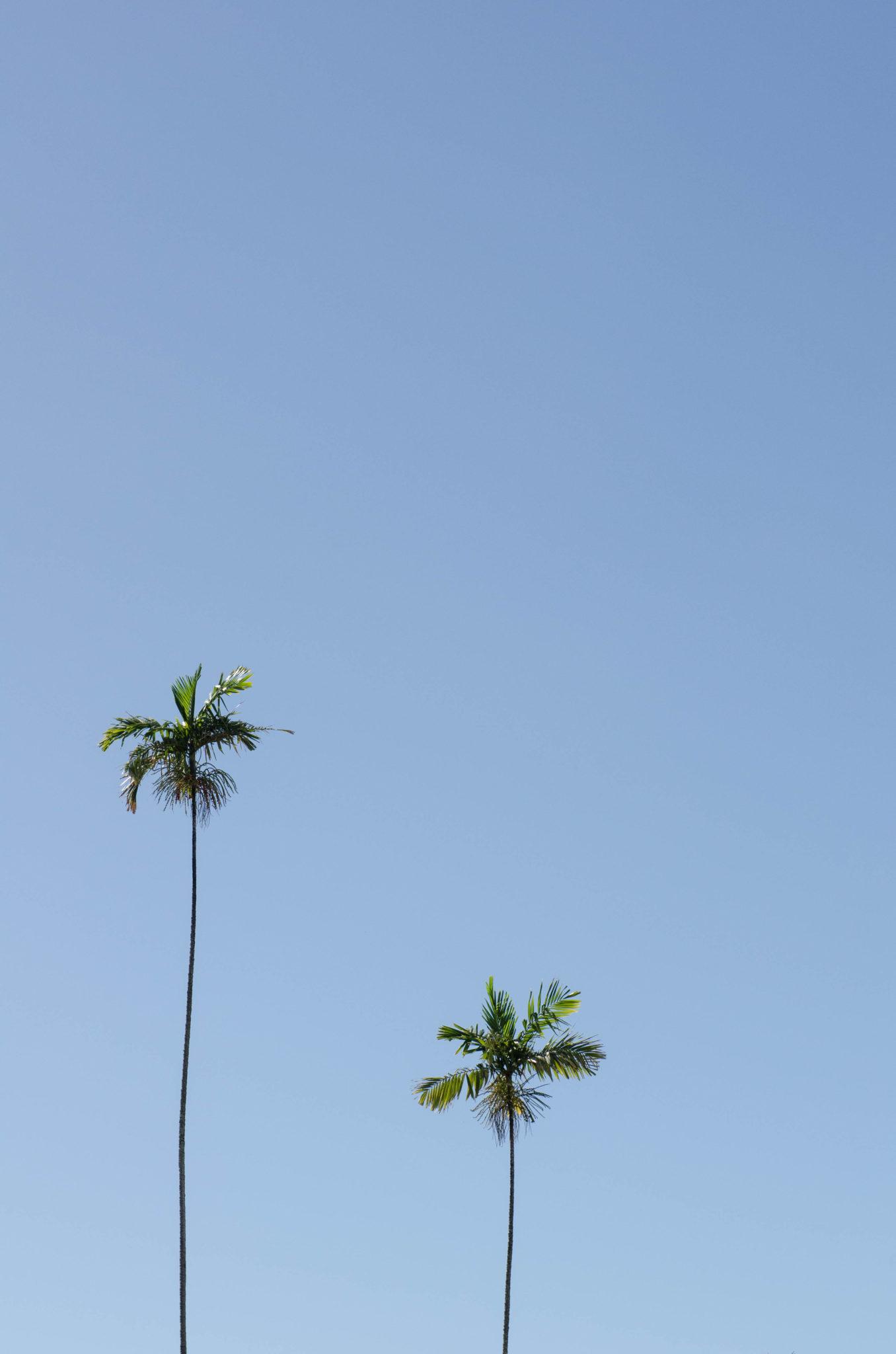Sehenswürdigkeiten Hawaii: Oahu und seine ewig großen Palmen
