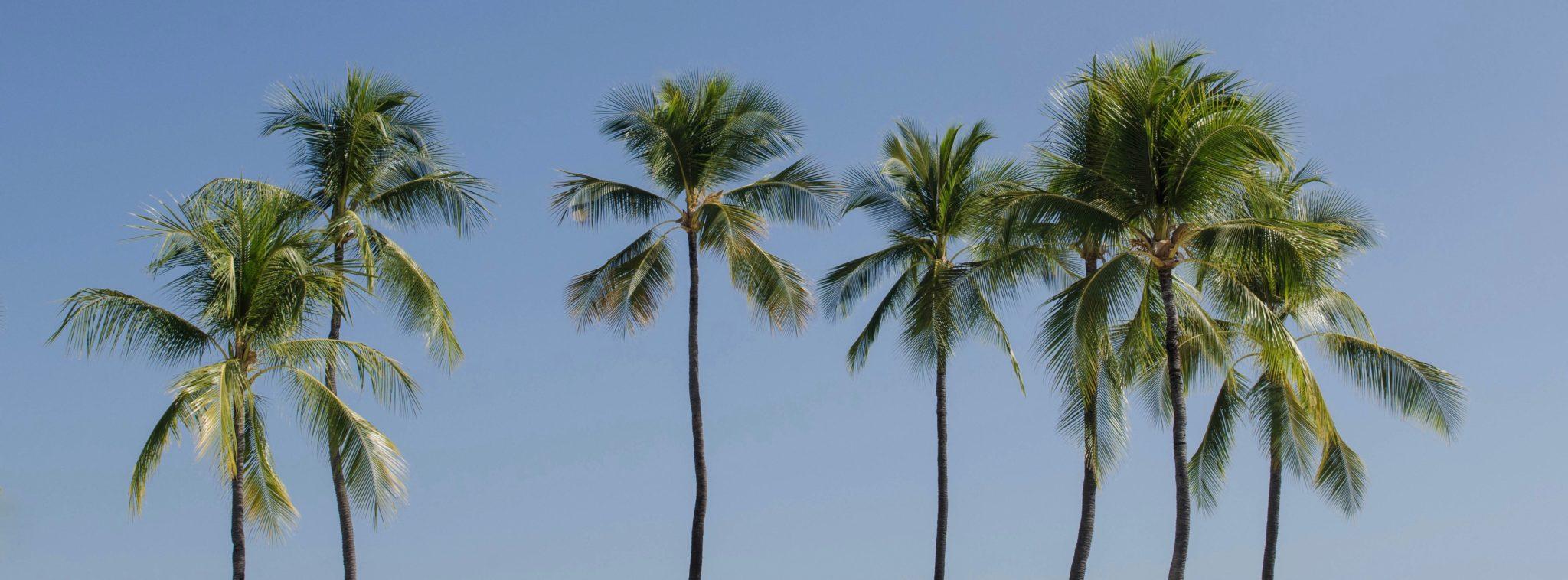 Sehenswürdigkeiten Hawaii