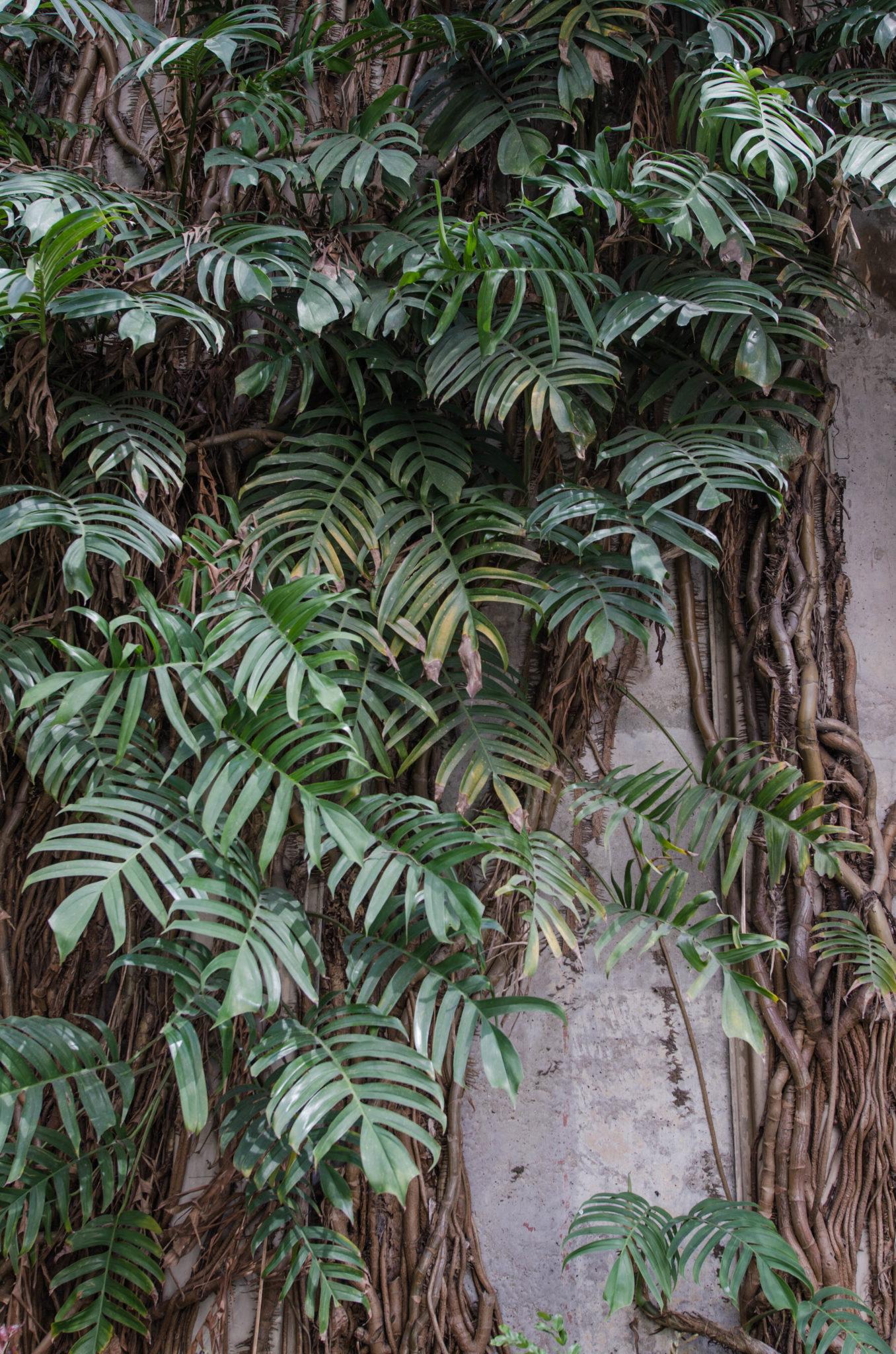 Pflanzen in der Nähe des Hoteleingangs