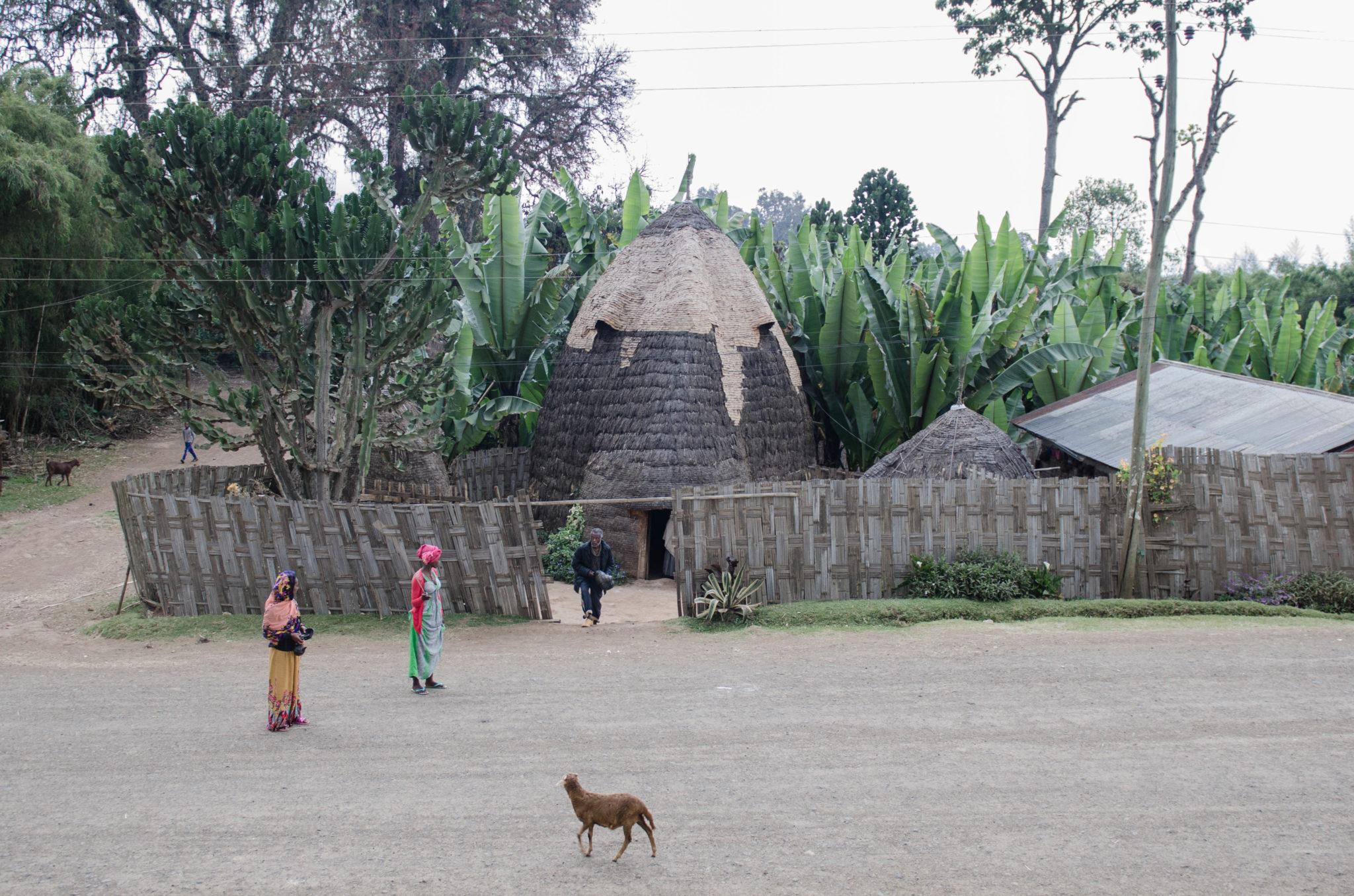 Die Dorze leben in Hütten, die an den Kopf eines Elefants erinnern.