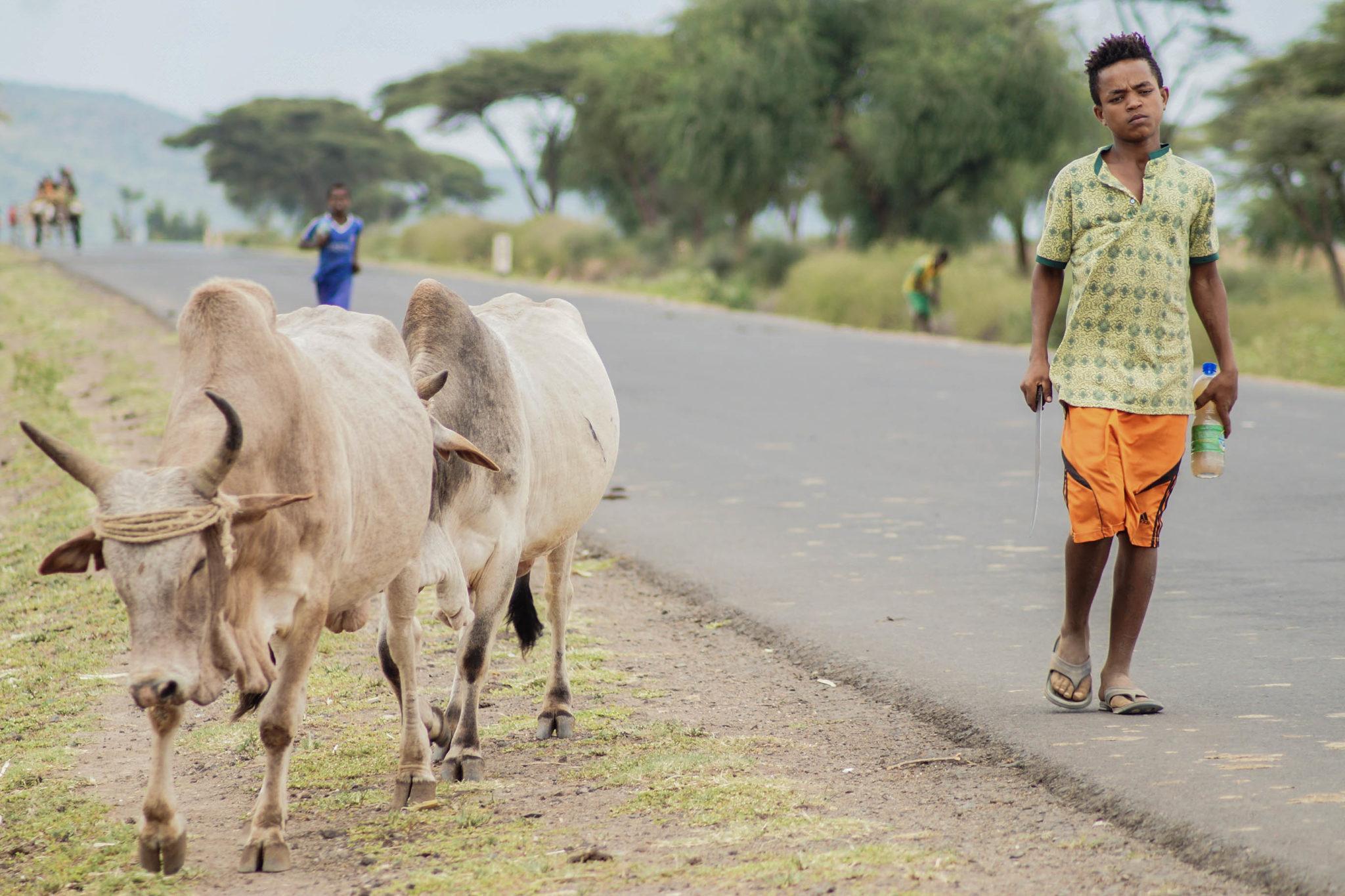 Der Weg zum Dorze Dorf in Äthiopien ist zwar lang, steckt jedoch voller Überraschungen.