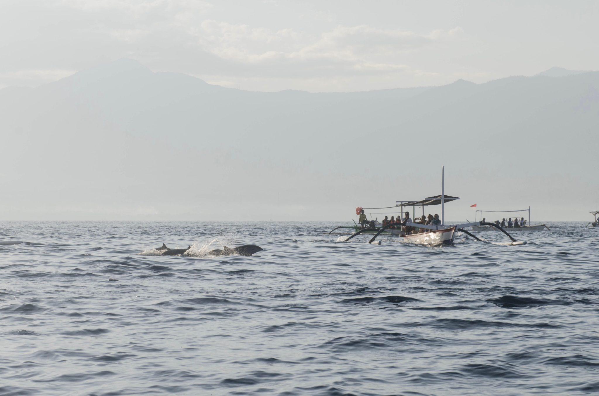 Die Delfine von Bali: Jagd im Paradies