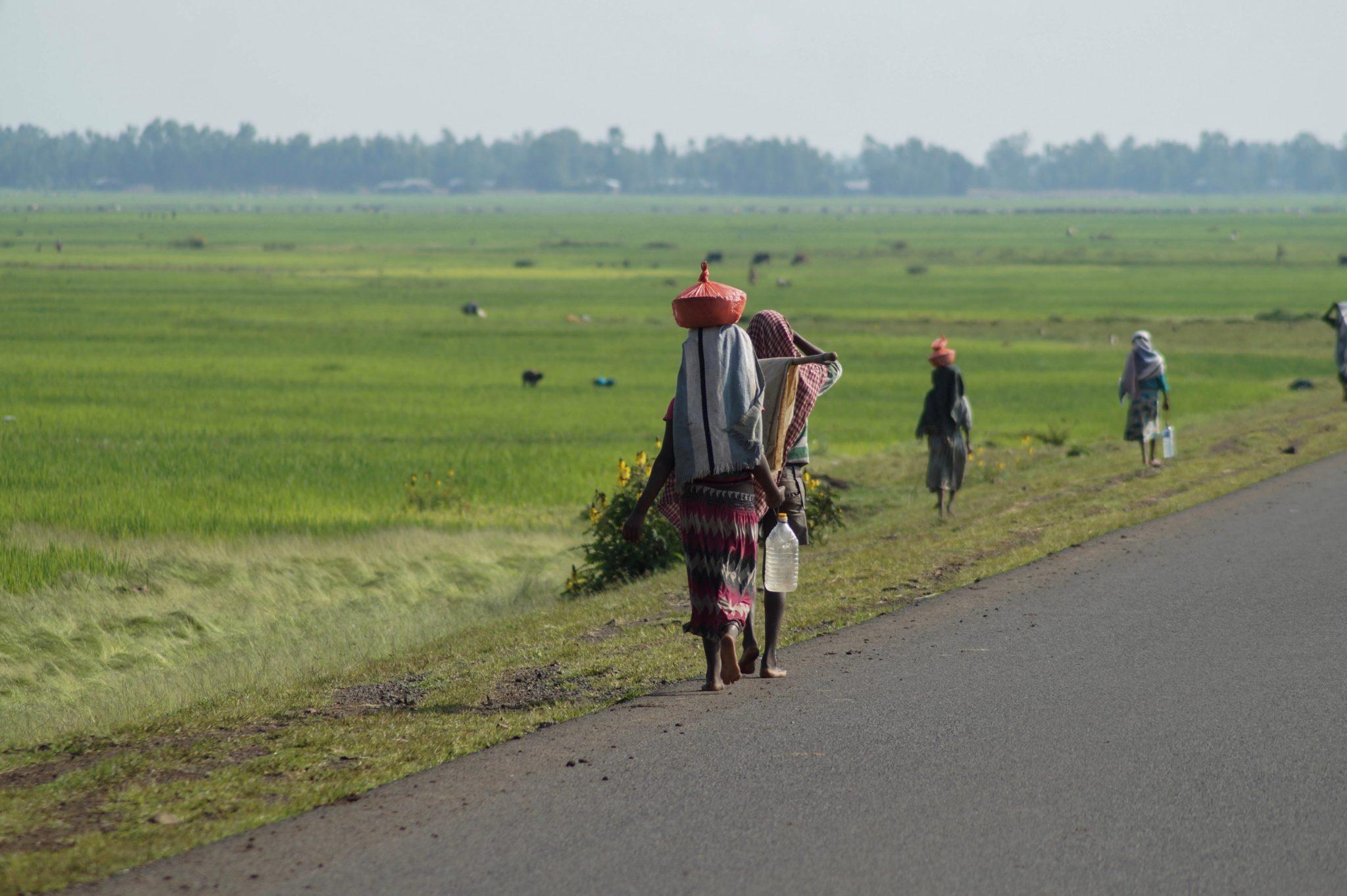 Äthiopien Norden: Grün, grüner, Äthiopien.