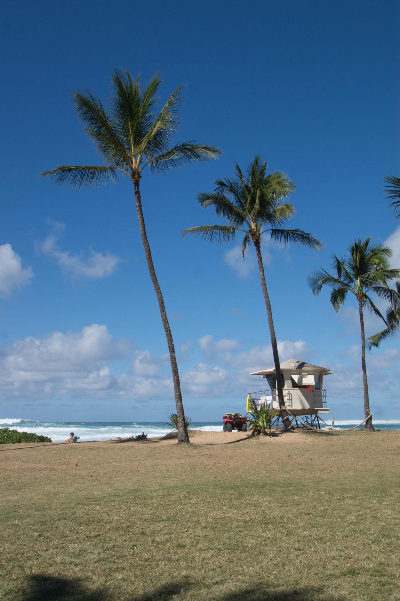 Palmen an der North Shore von Oahu