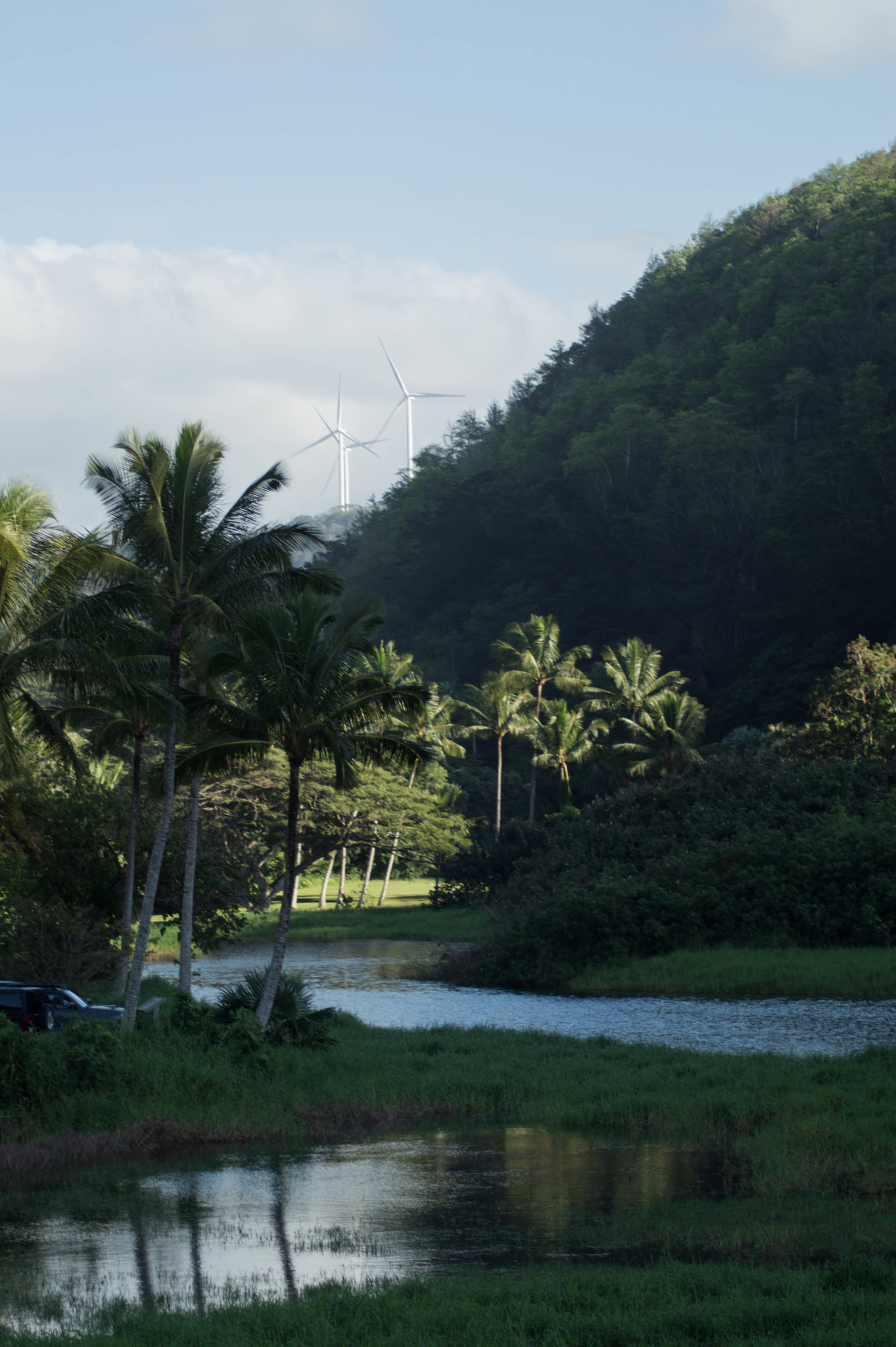 Zwischendurch findet man auf Oahu Hawaii immer wieder ein paar Wetlands