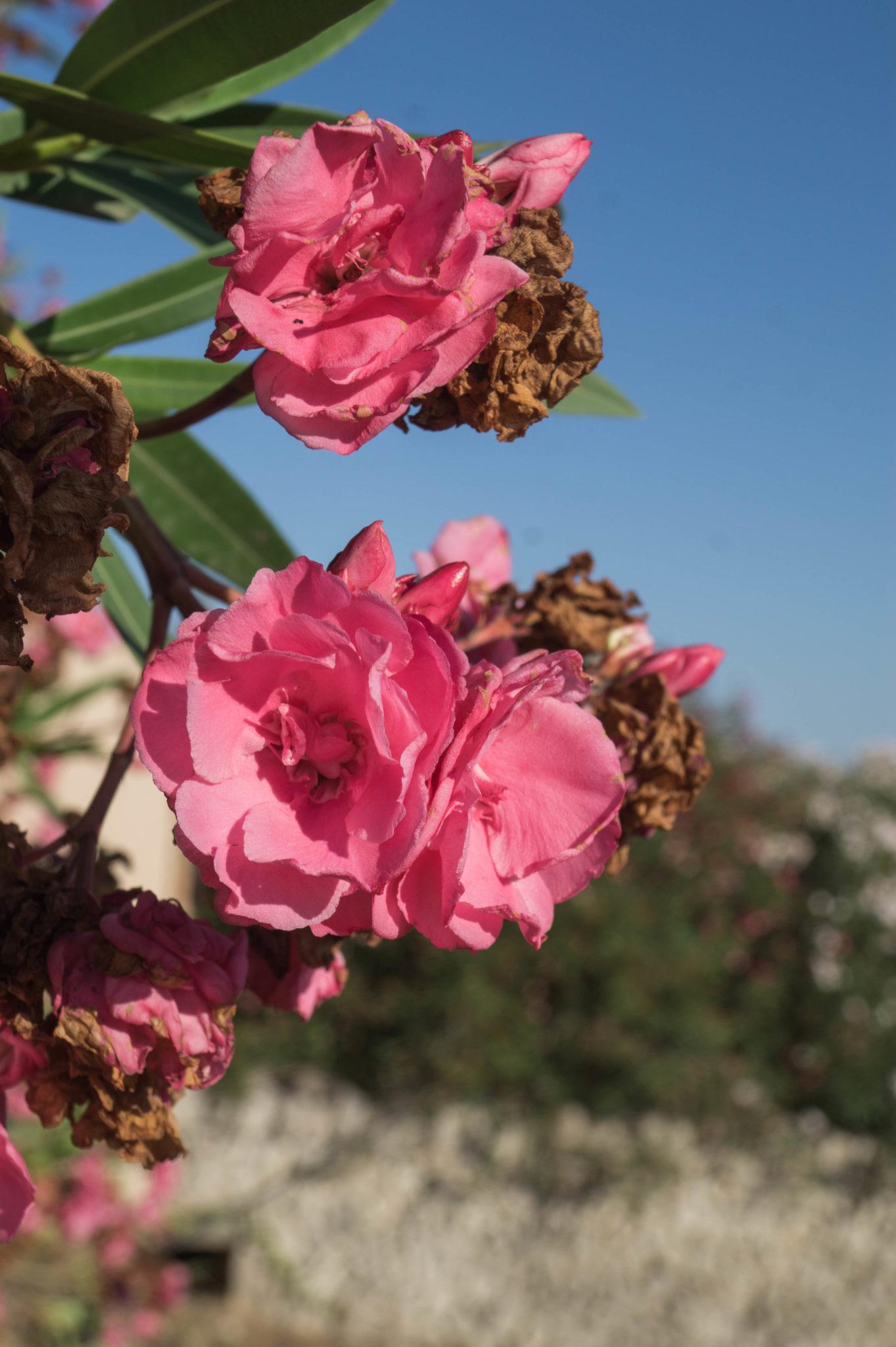 Yoga Retreat Mallorca: Die Son Manera Retreat Finca liegt im Herzen von Mallorca