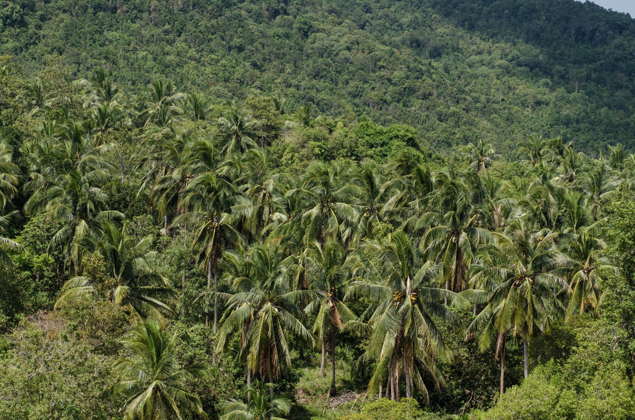 Palmen überall