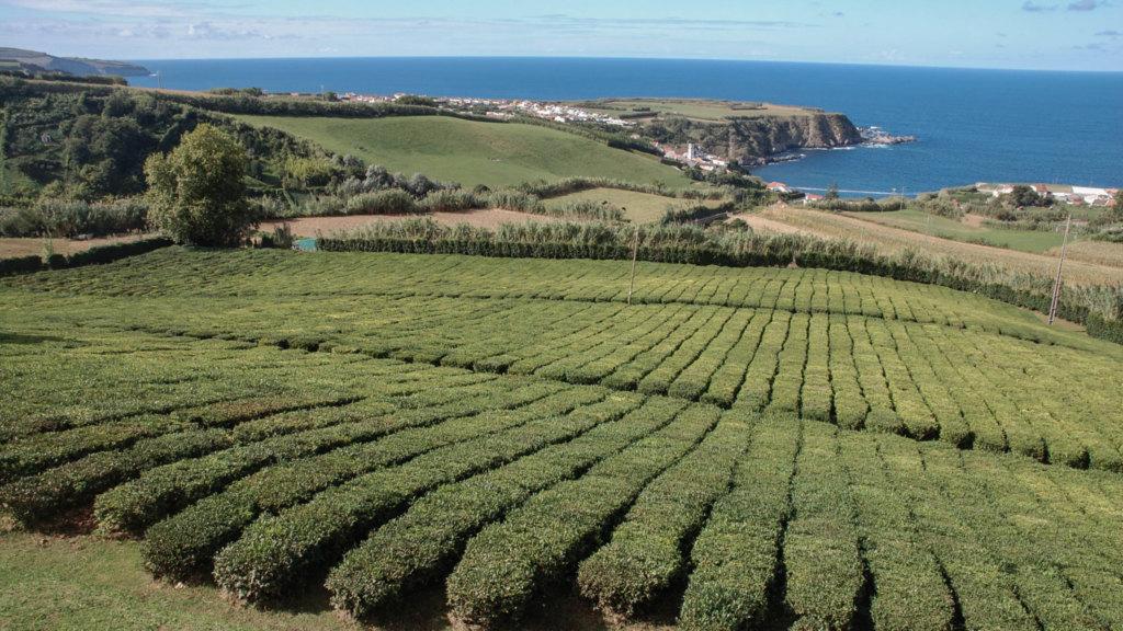 Sao Miguel: Sehenswürdigkeiten und Tipps für die Azoren Insel
