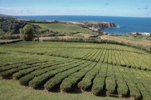 Knallgrüne Inselschönheit der Azoren: São Miguel
