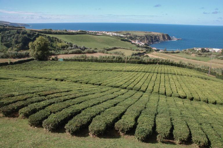 Azoren Sehenswürdigkeiten: Insidertipps für die Paradiesinsel São Miguel