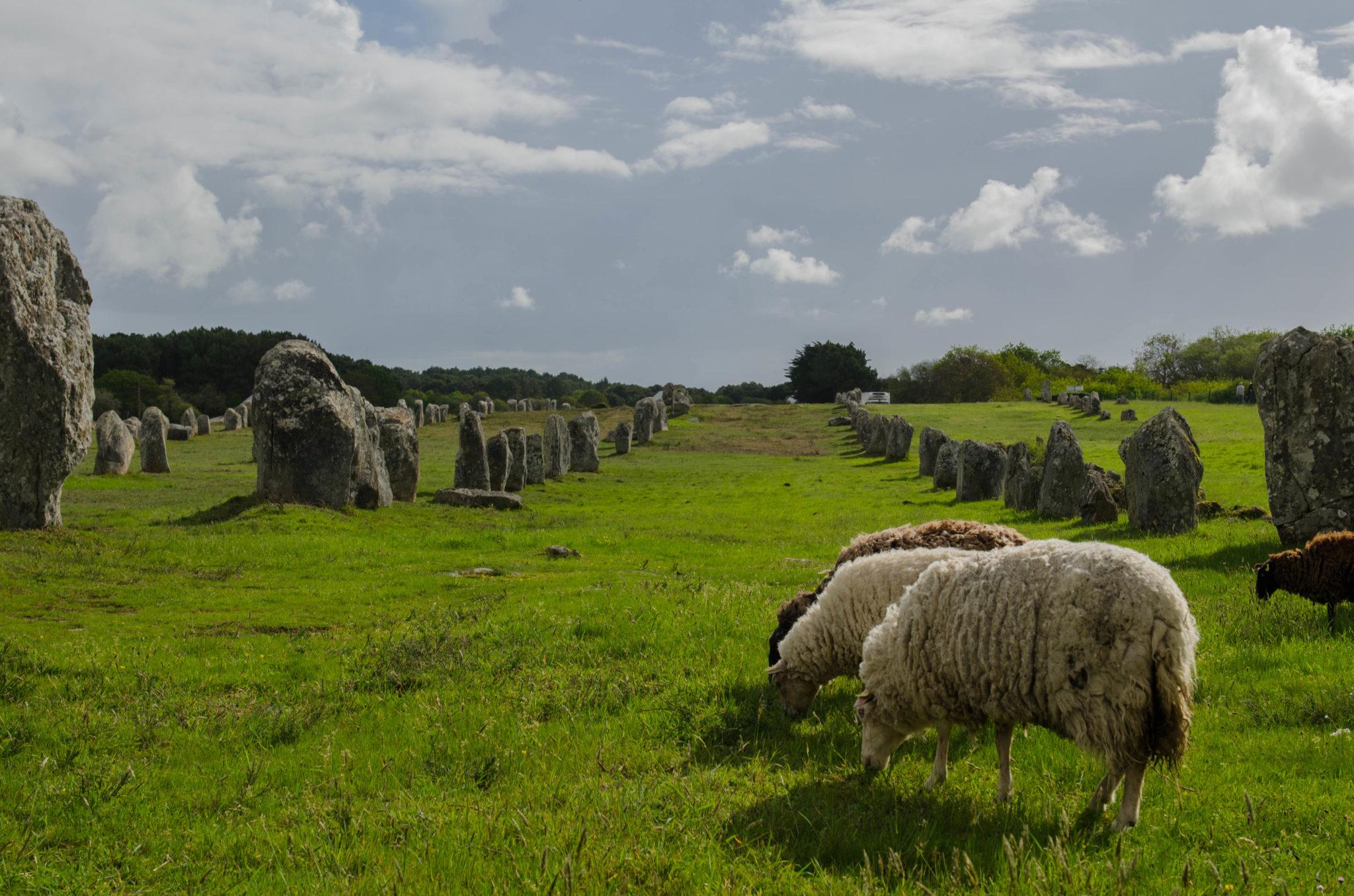 Bretagne Tipps: Hinkelsteine in Carnac