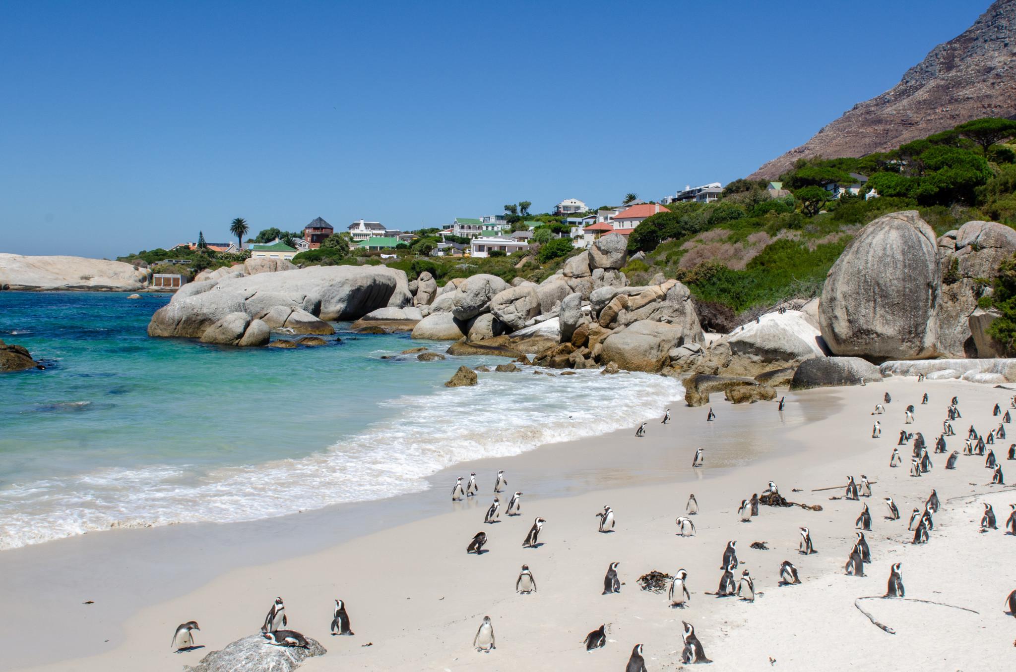 Die Pinguine am Boulders Beach sind schon berühmt