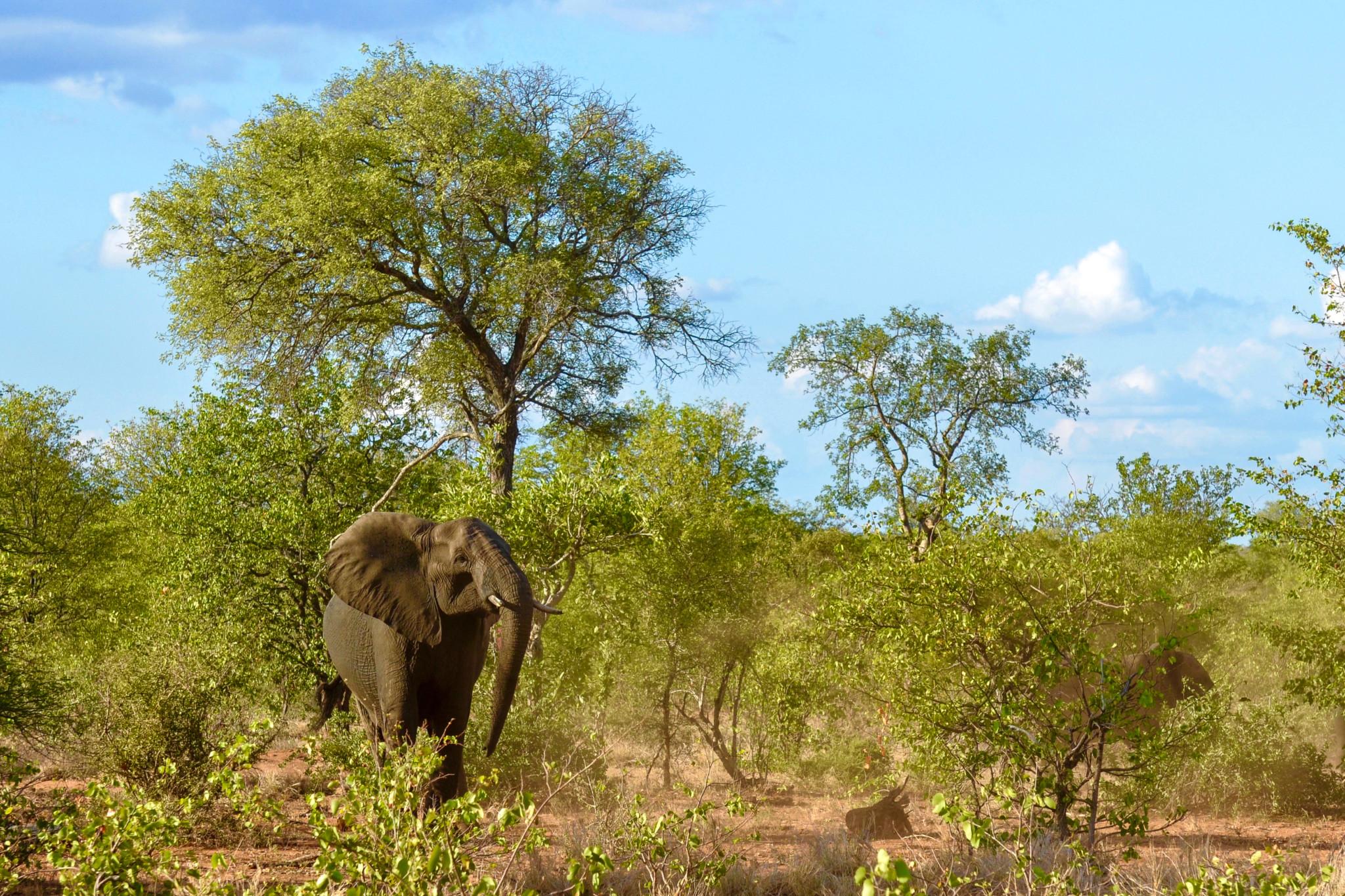 Elefanten gehören selbst schon zu den Südafrika Sehenswürdigkeiten