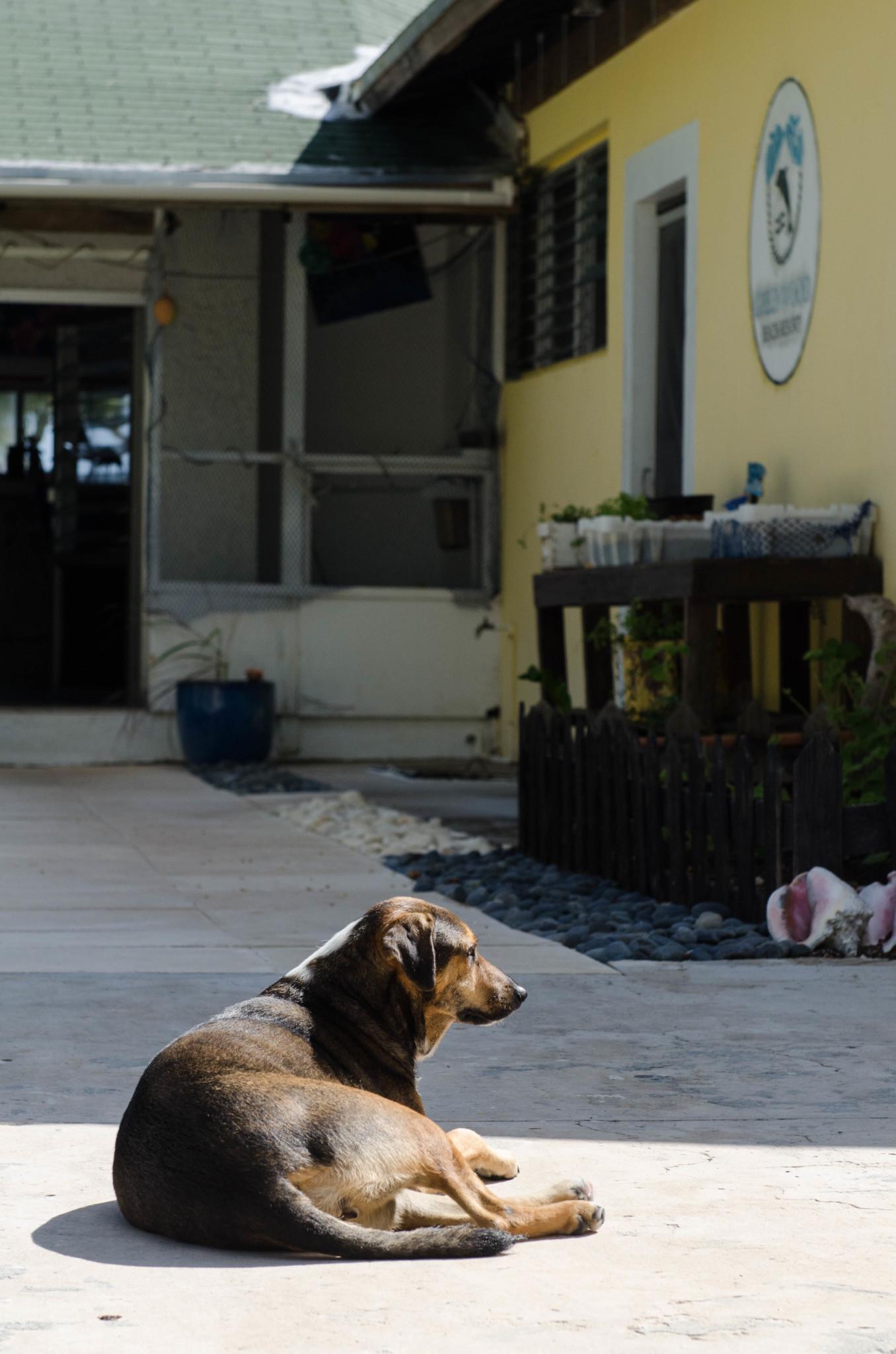 Hund im Greenwood Beach Resort Hotel auf den Bahamas