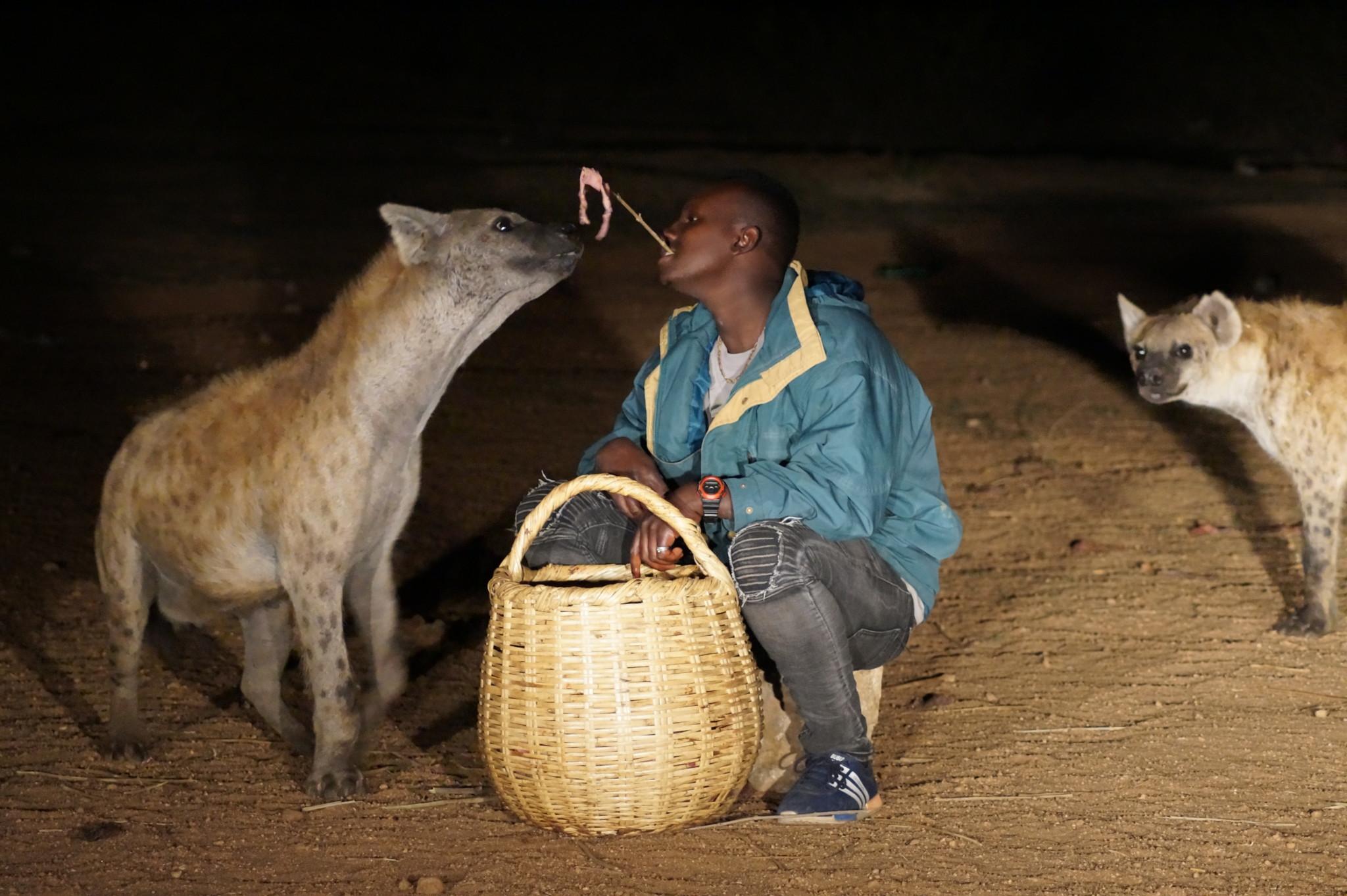Hyänen von Harar gehören zu den Äthiopien Sehenswürdigkeiten