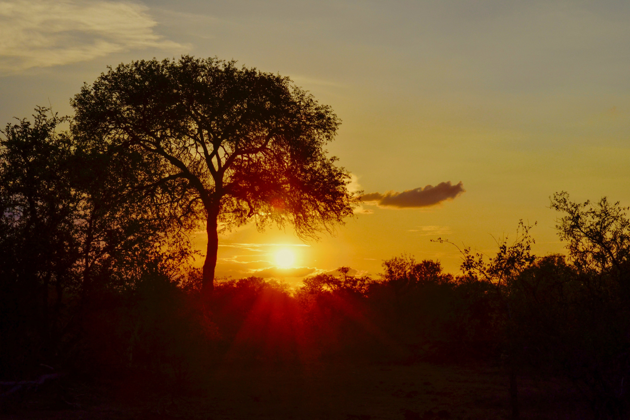 Sonnenuntergänge auf Safari sind unbezahlbar