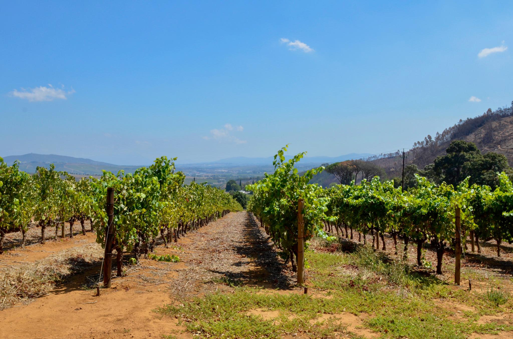 Stellenbosch ist für den guten Wein bekannt