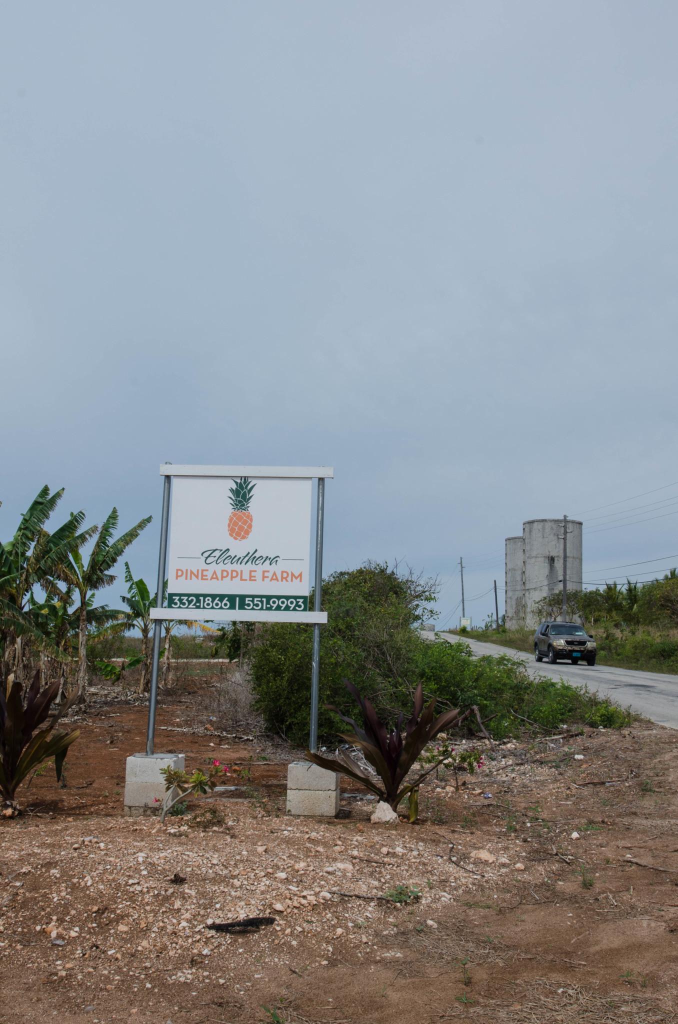 Ananasplantage zur Besichtigung auf Eleuthera