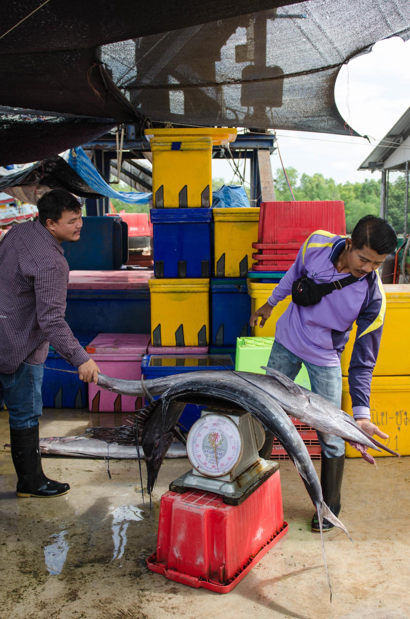 Chumphon Fischmarkt Pak Nam