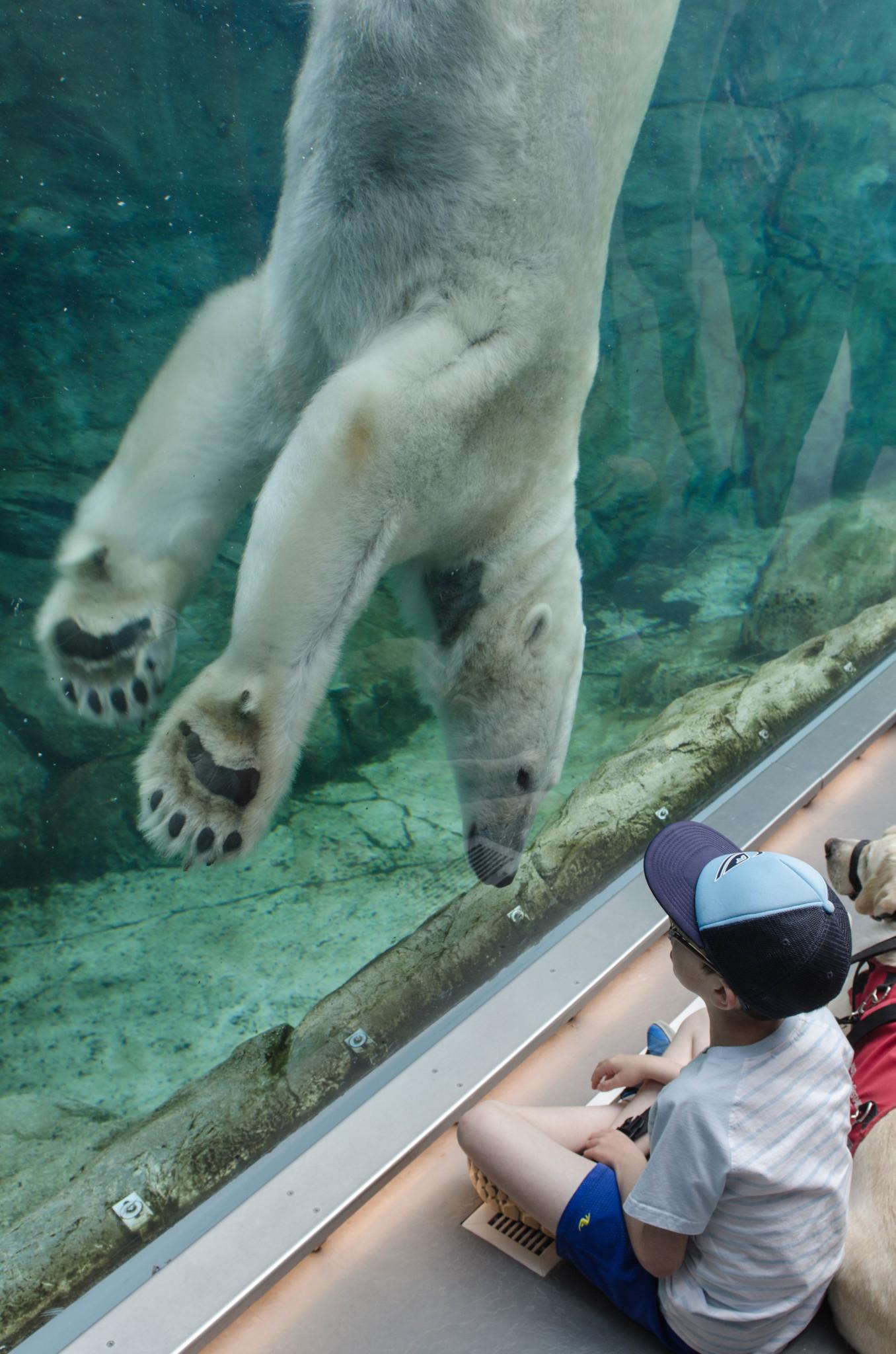 Eisbären auf dem Journey to Churchill