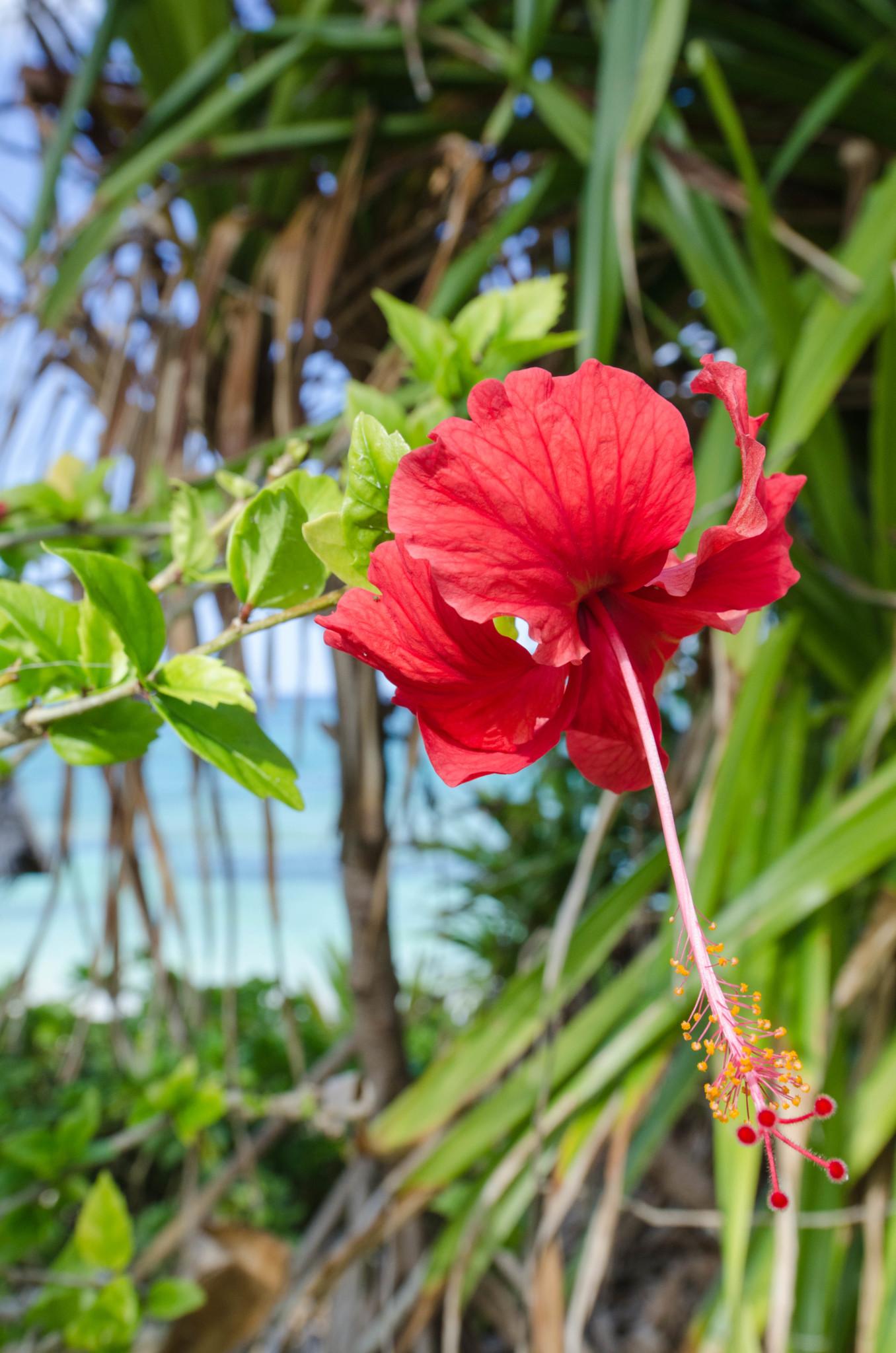 Pflanzen auf den Bahamas