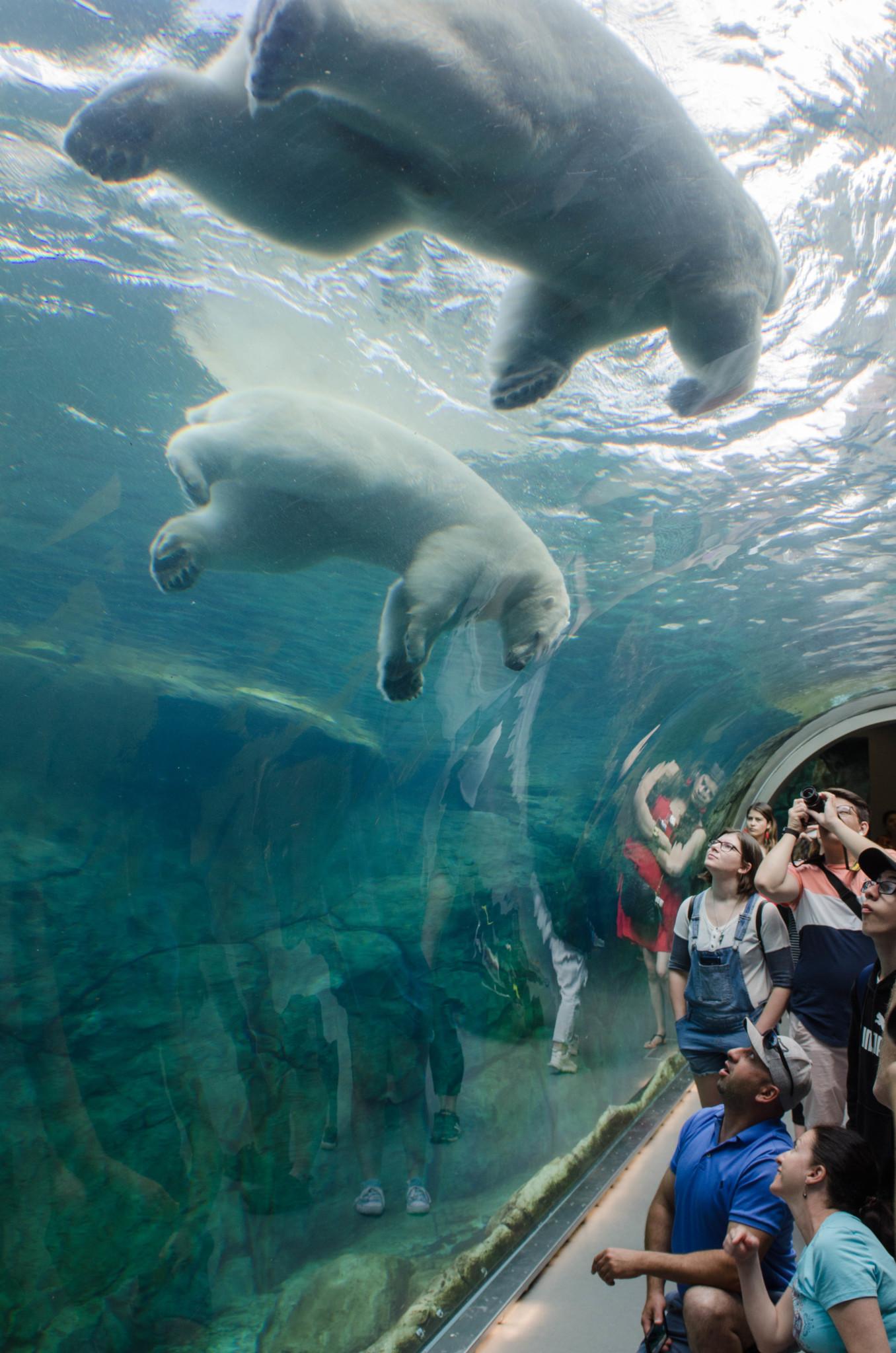 Journey to Churchill im Zoo von Winnipeg