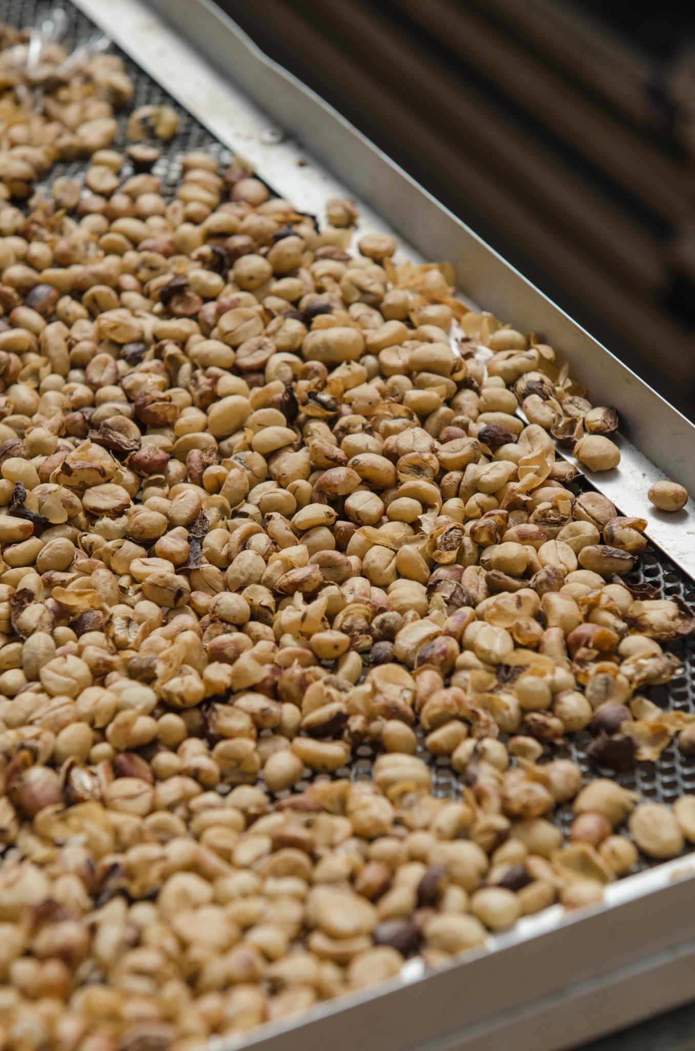 Robusta Kaffeebohnen in Thailand
