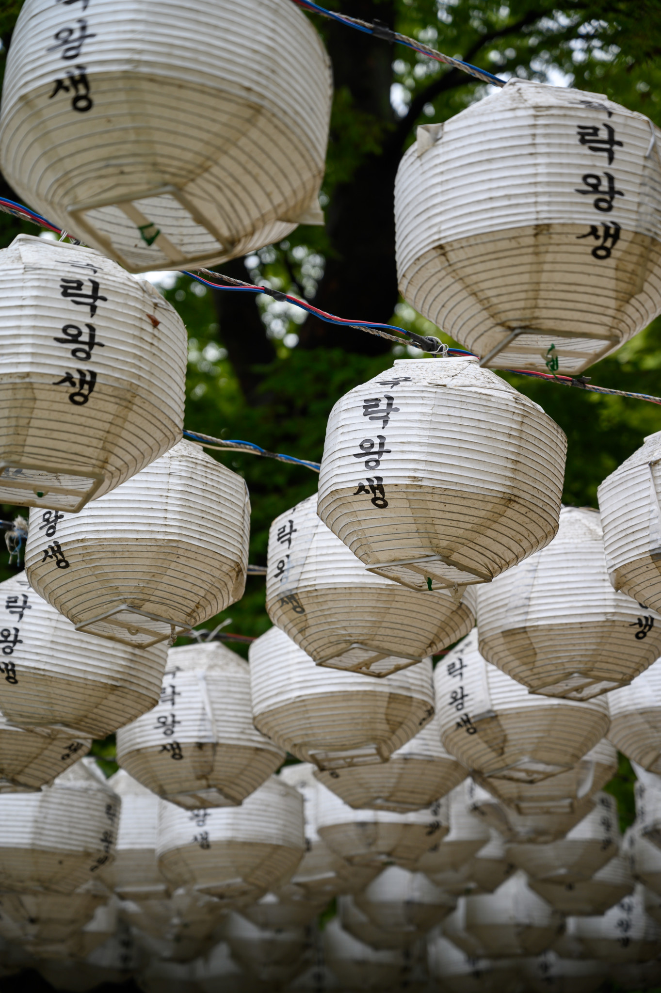 Lampions im Jeondeungsa Tempel auf Gangwa Island in Südkorea